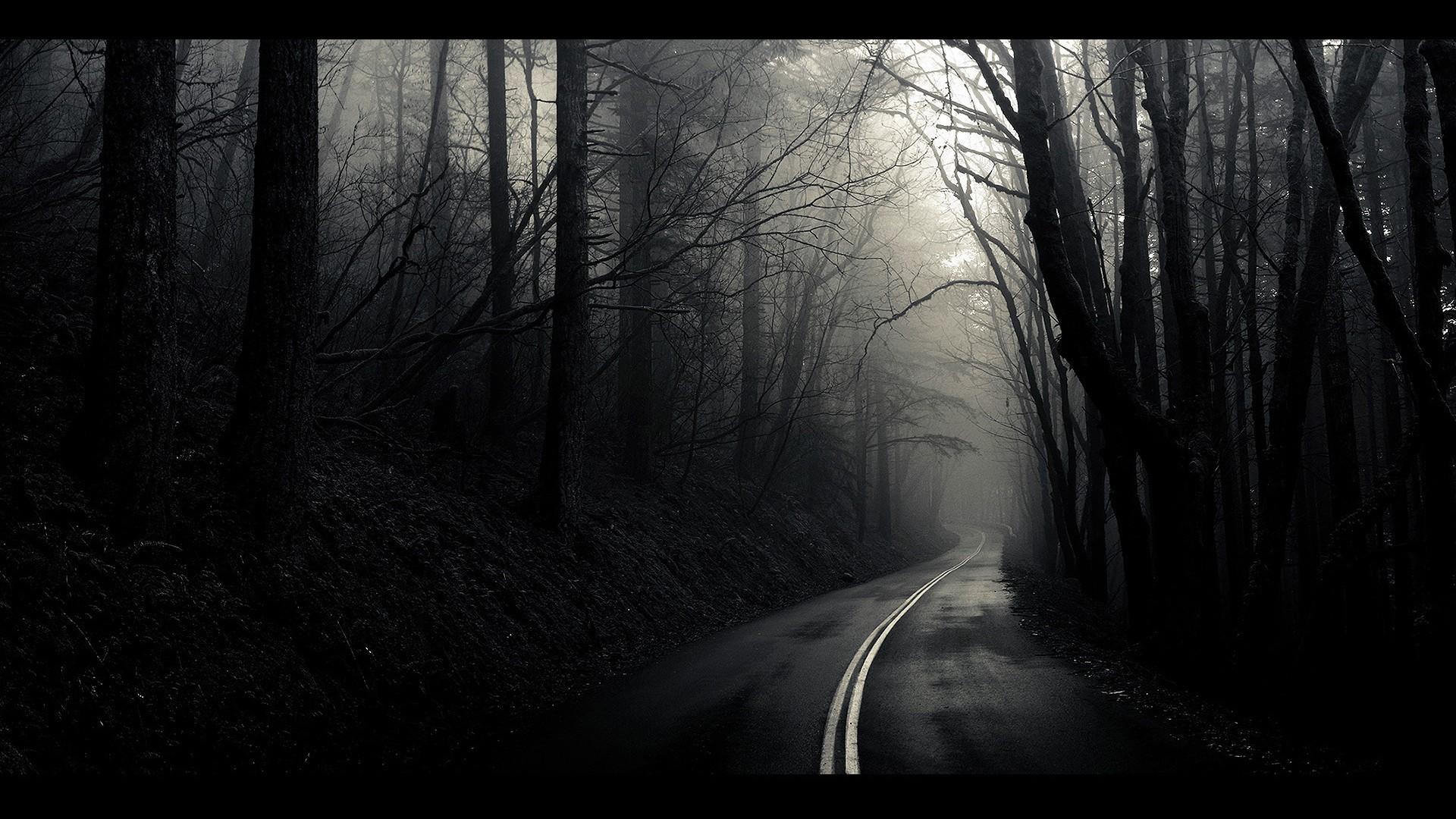 1920x1080 monochrome tag roads monochrome path landscapes mist fog white black trees beautiful nature hd desktop