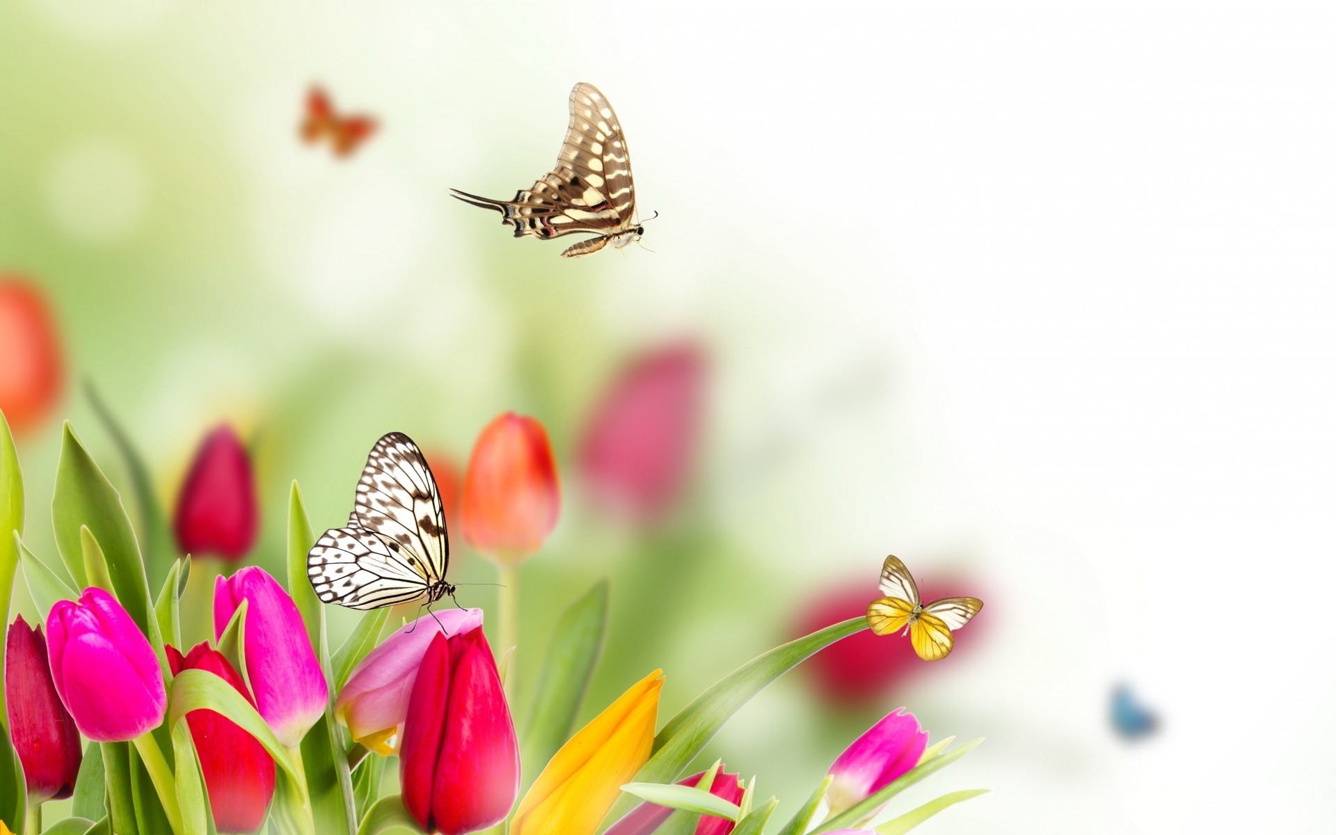 1920x1200 spring flowers and butterflies background hd Wallpaper HD