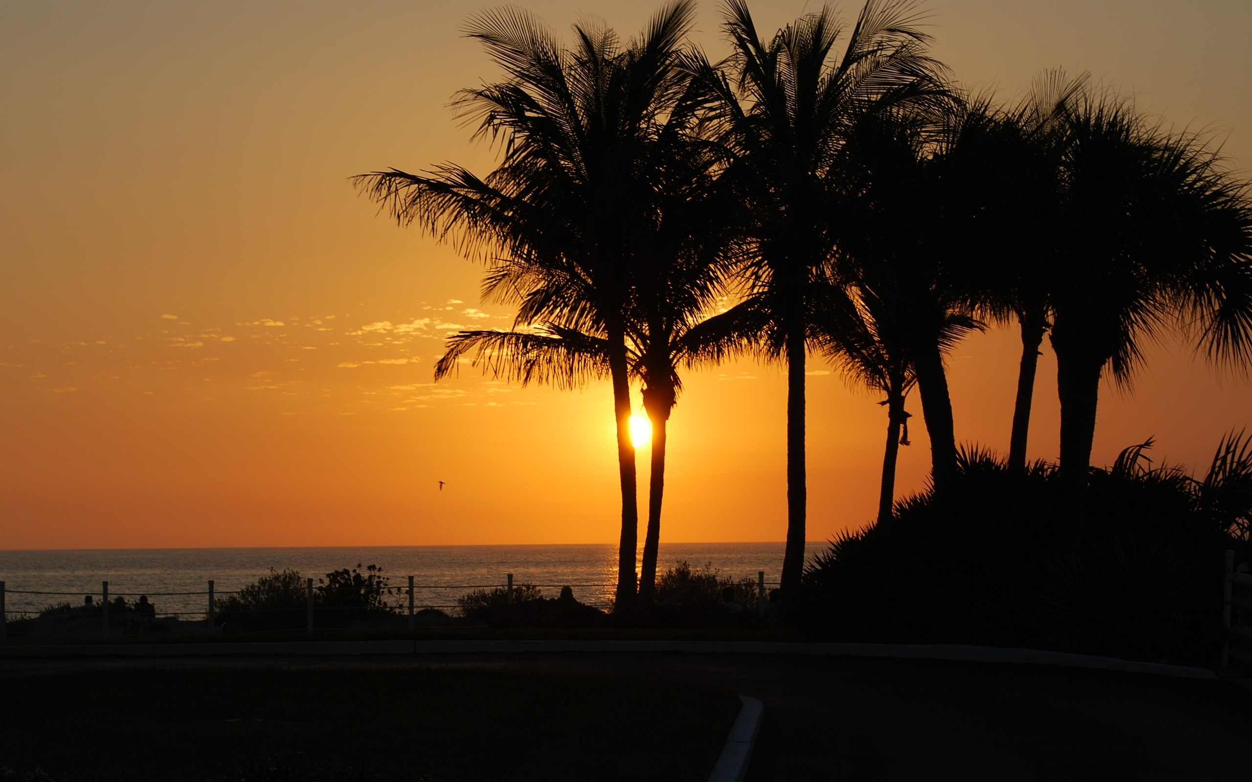 2560x1600 Nature palm trees silhouettes sunlight wallpaper