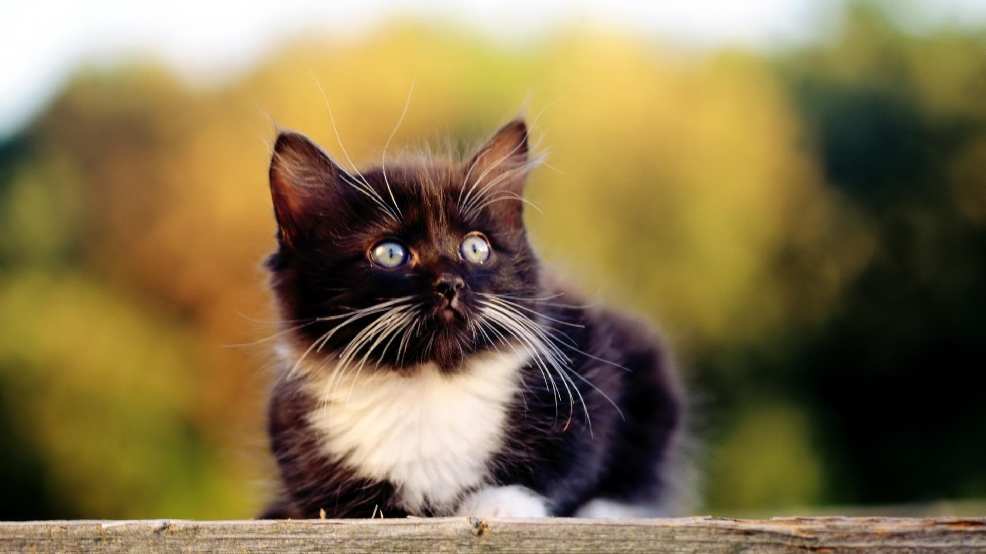 Kitten Wallpaper For Desktop 64 Images