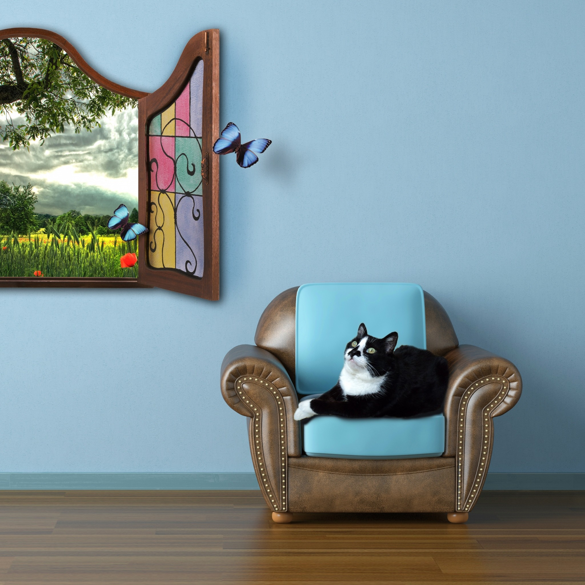 2048x2048  Wallpaper cat, summer, window, watching, fairy tale, butterfly