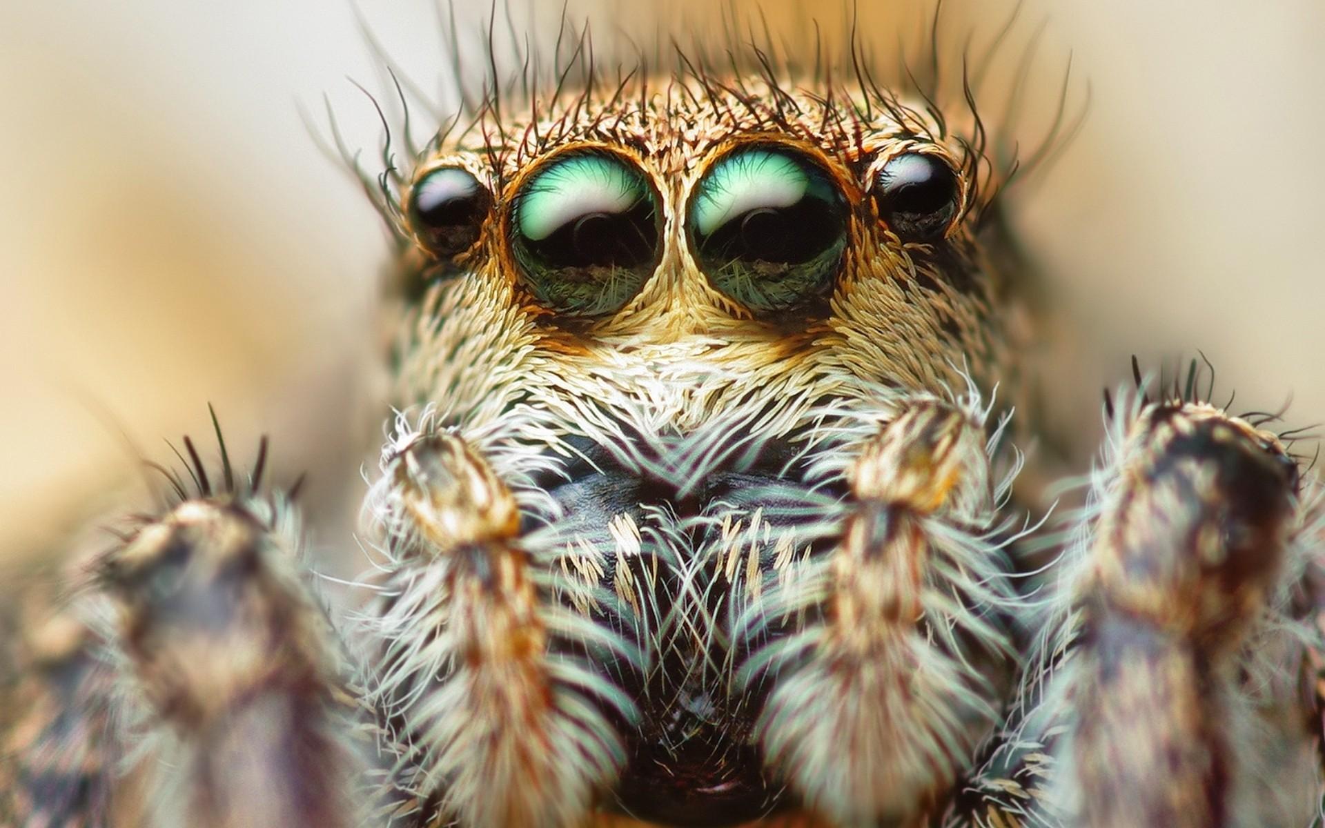 Scary spider wallpaper 65 images - Moving spider desktop ...