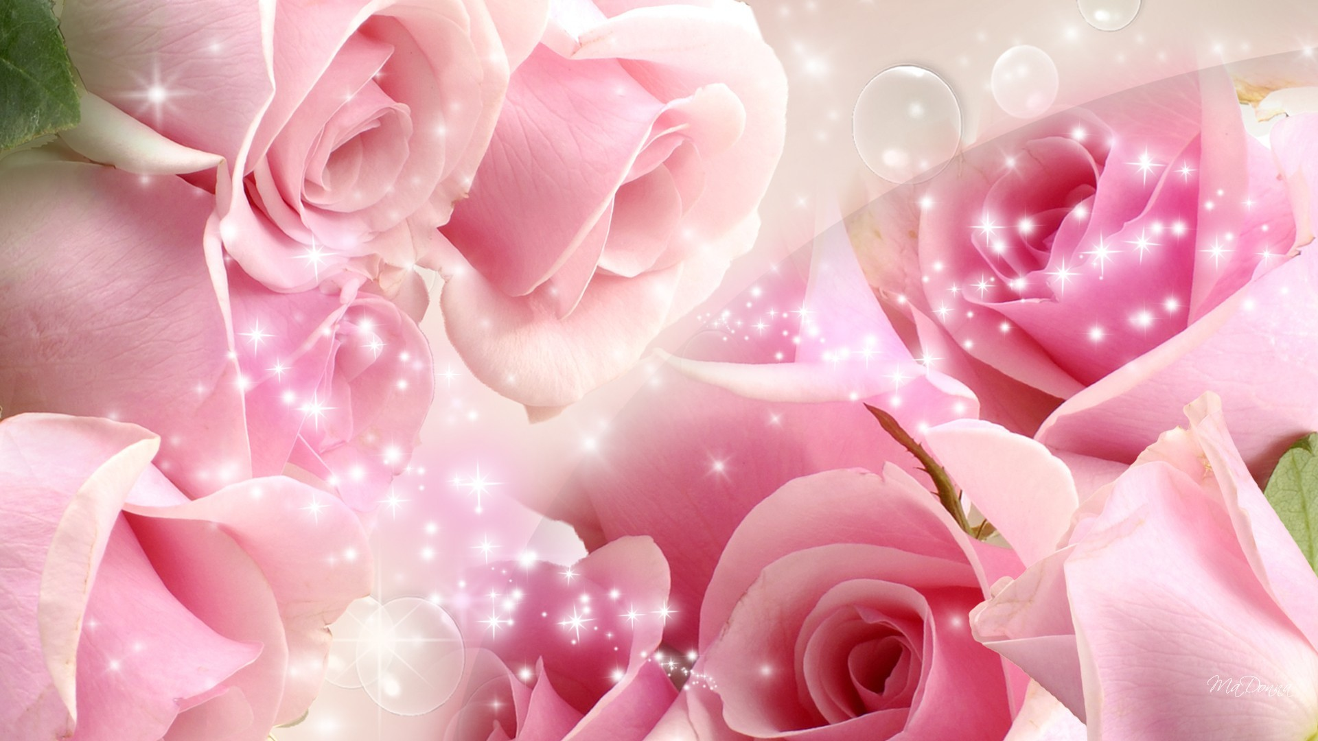 Pink roses background 34 images - Pink rose black background wallpaper ...