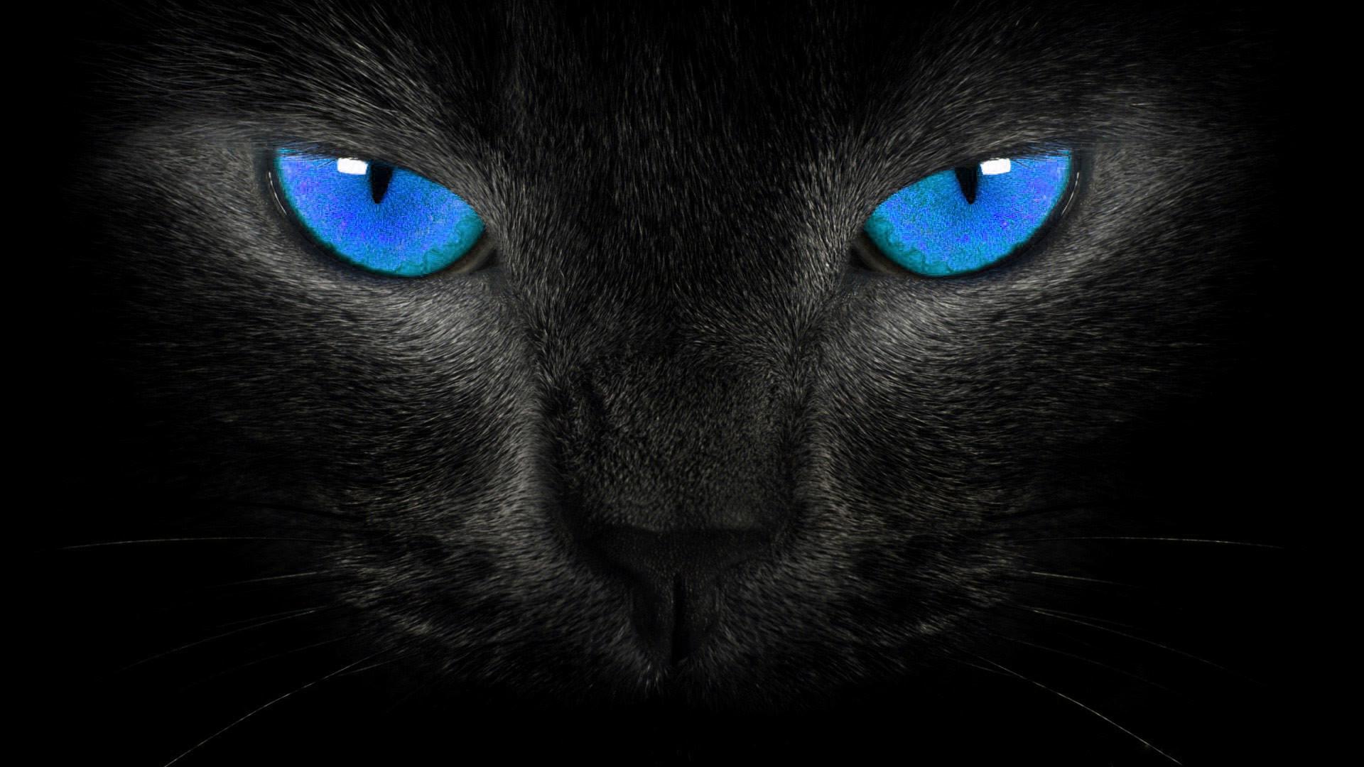 Black Panther Blue Eyes Wallpaper 60 Images