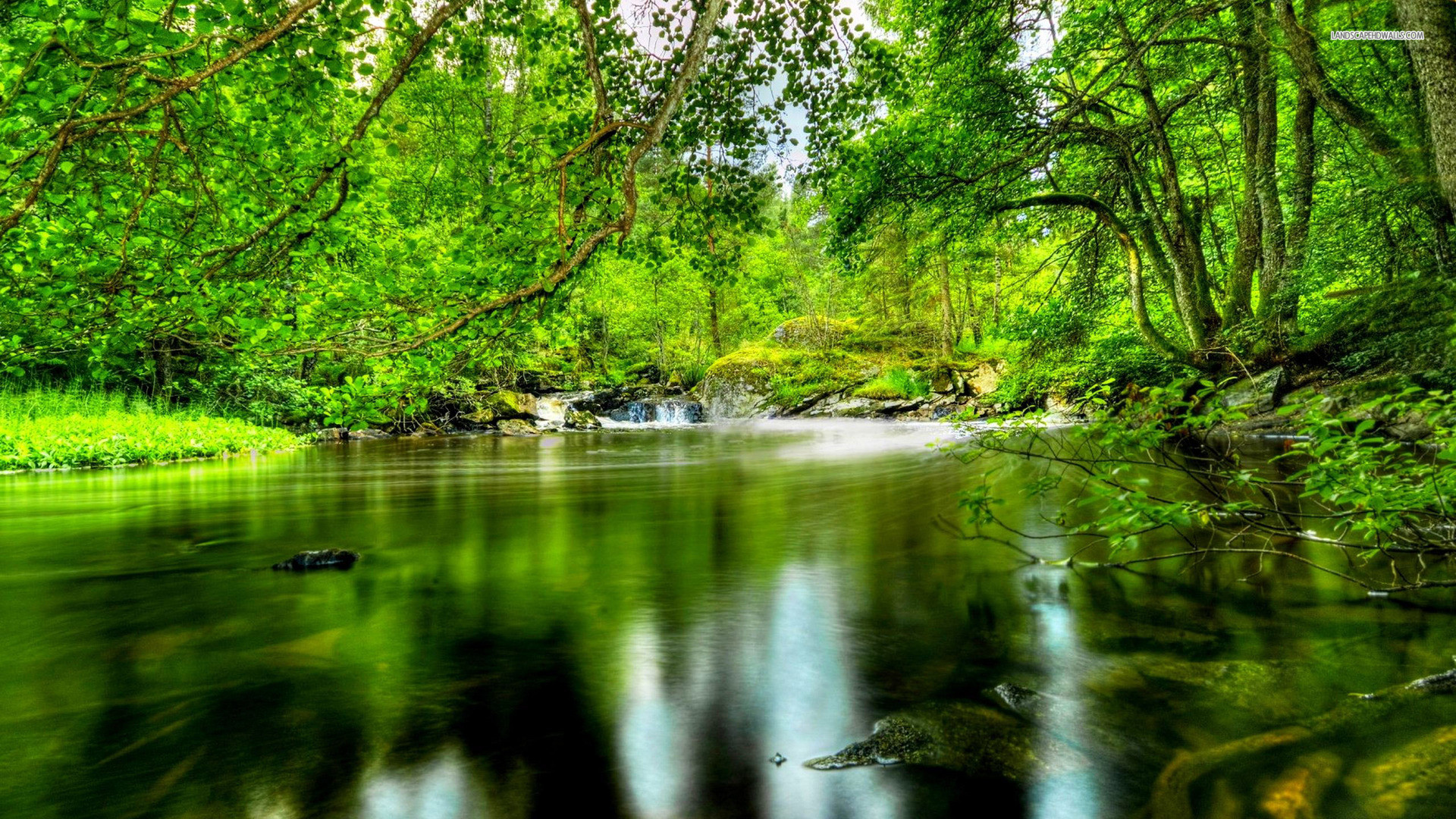 Rivers Forest River Bridge Nature Photos High Quality for HD