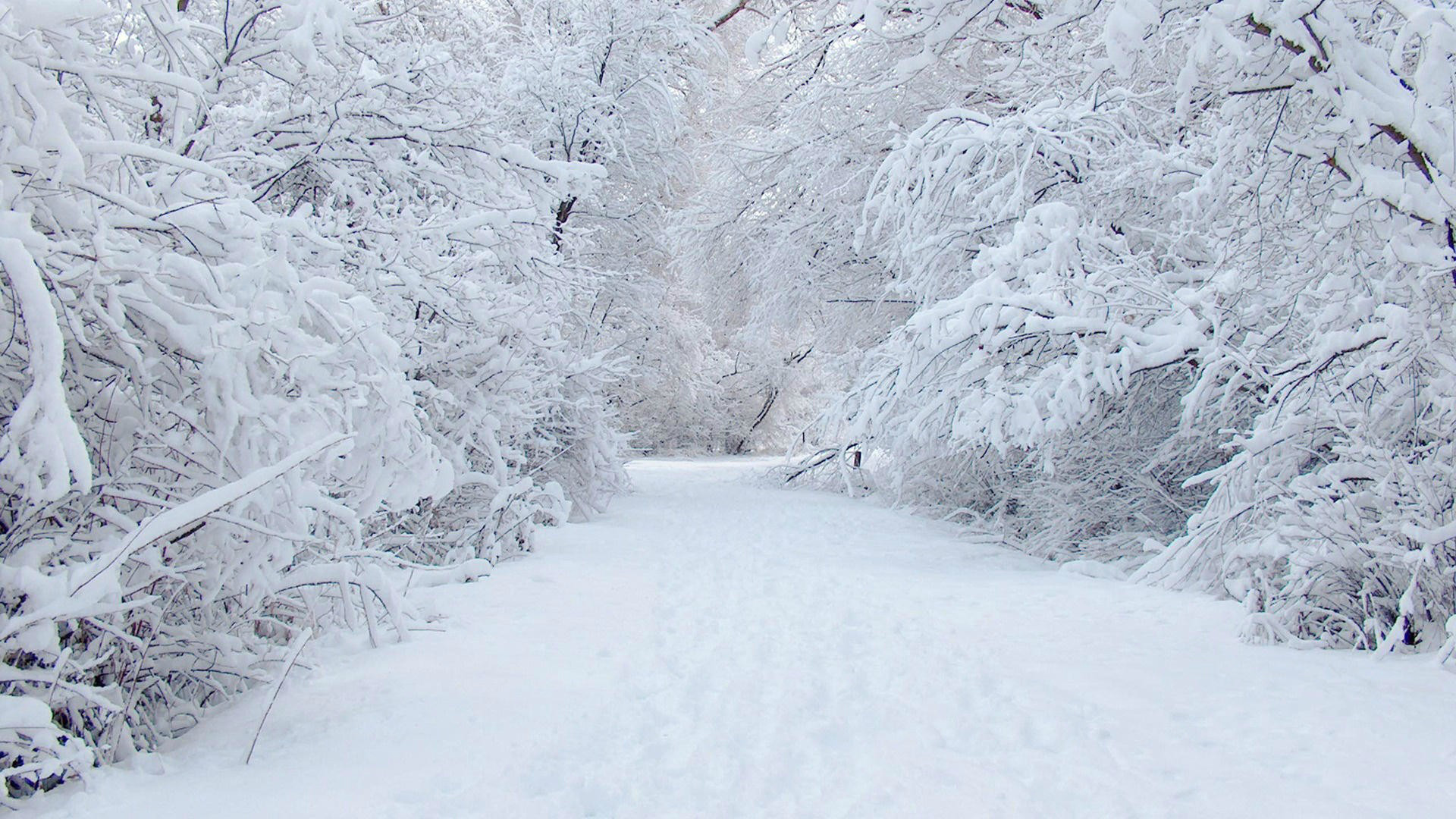 Animated snow scene wallpaper 41 images 2560x1920 winter nature snow scene wallpaper 19808 full hd wallpaper desktop voltagebd Image collections