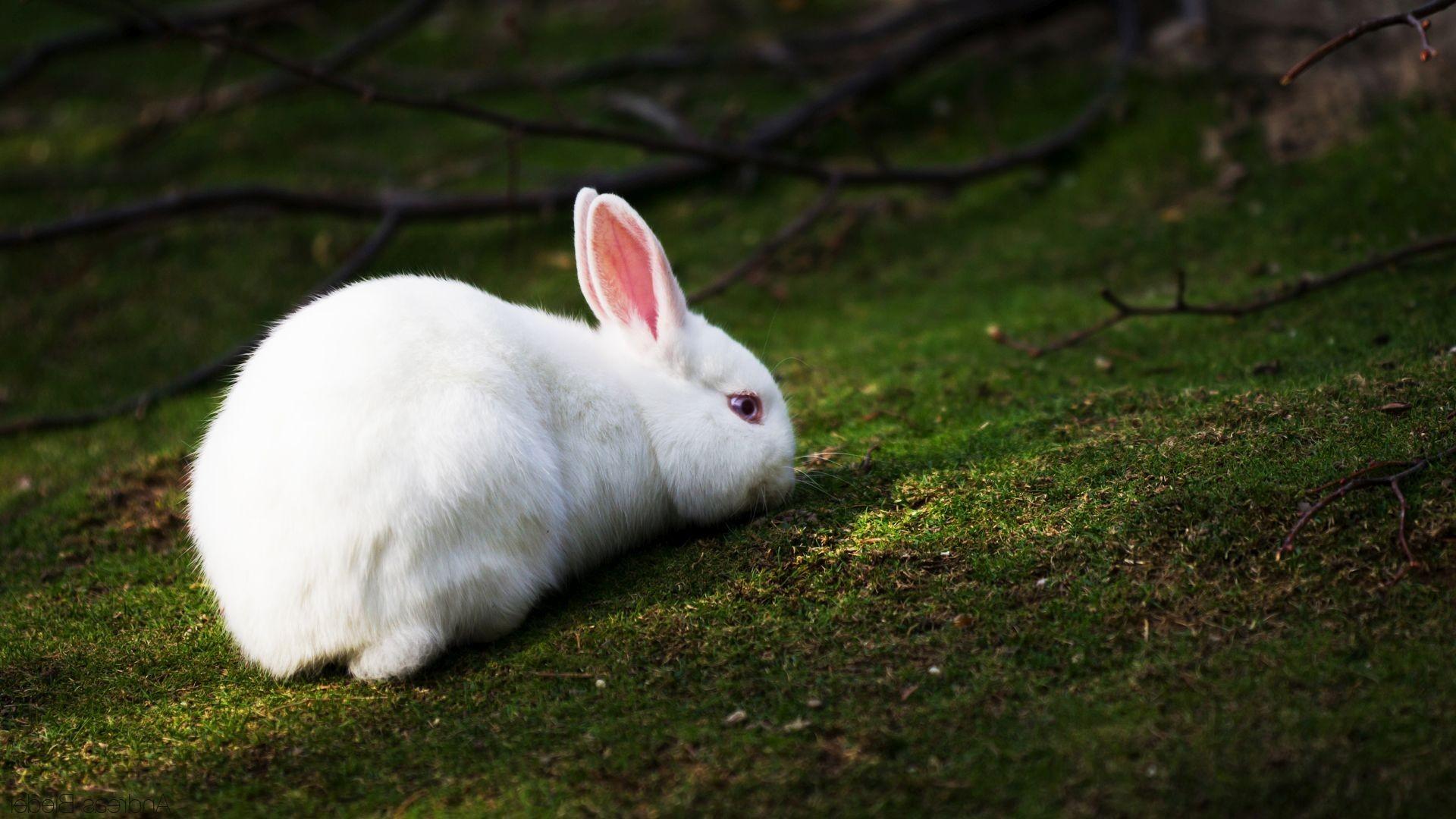 White Rabbit Wallpaper (66+ images)