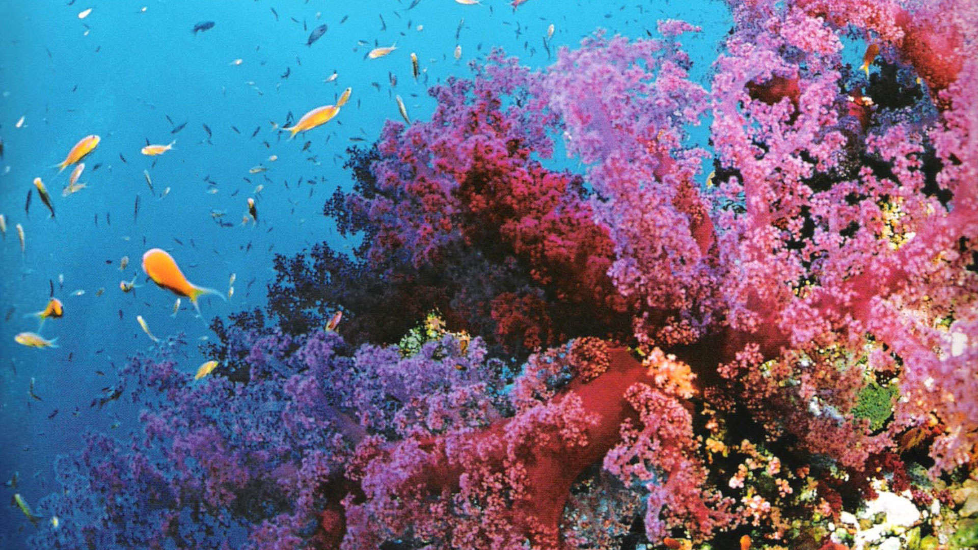 Coral reef wallpaper hd 65 images - Sea coral wallpaper ...