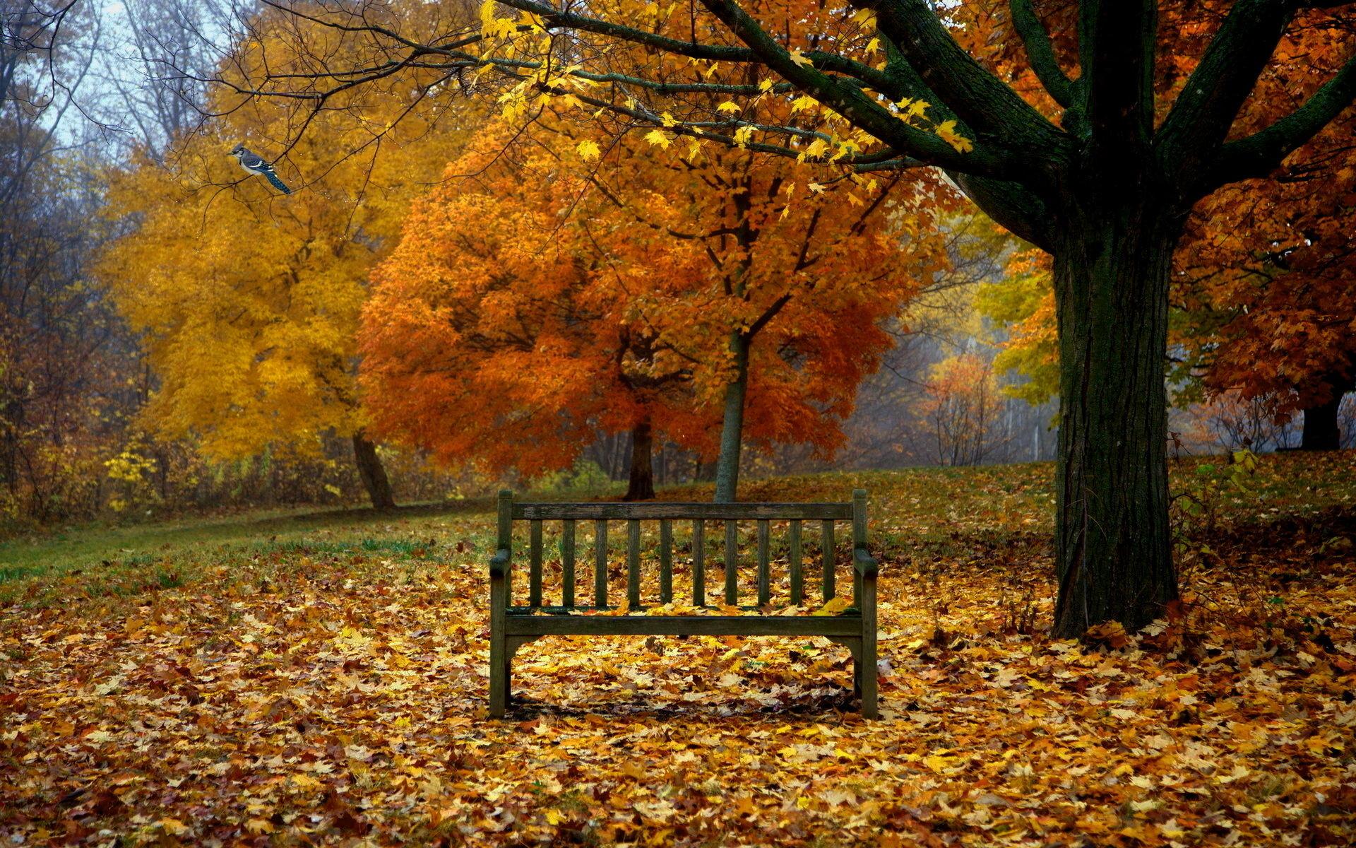 Beautiful fall scenery wallpaper 49 images - Pics of fall scenes ...
