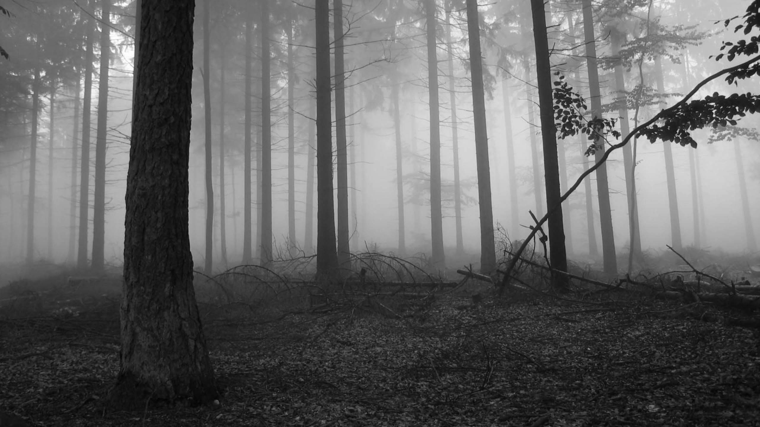 2560x1440 ... 24 Forest HD Wallpapers Backgrounds Wallpaper Abyss | Black Forest .