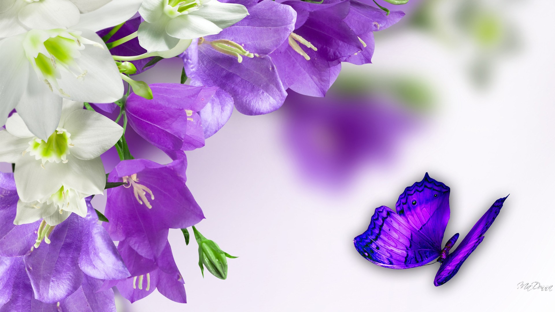 1920x1080 Cool Purple Butterfly wallpapers - The Cool Art · Easter FlowersLilies ...
