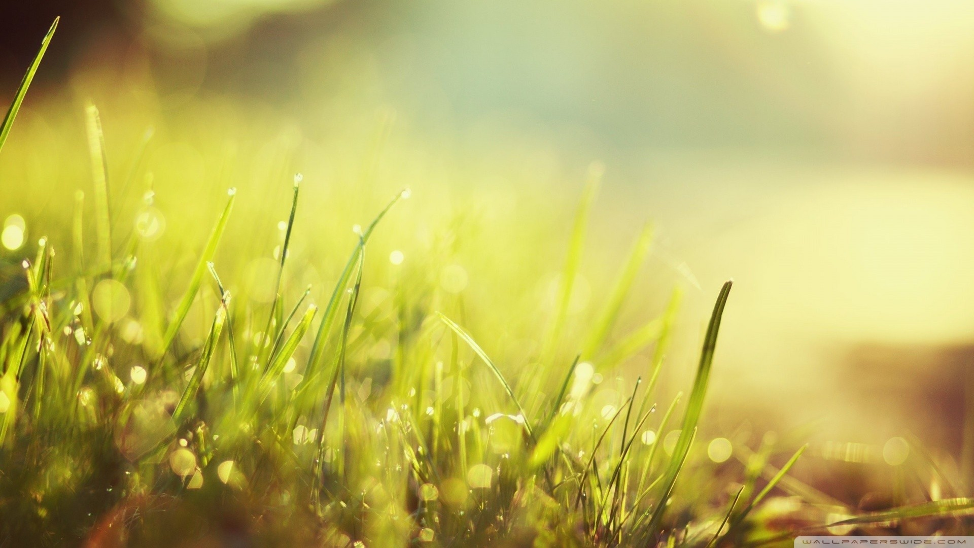 1920x1080 Green nature grass sunlight wallpaper