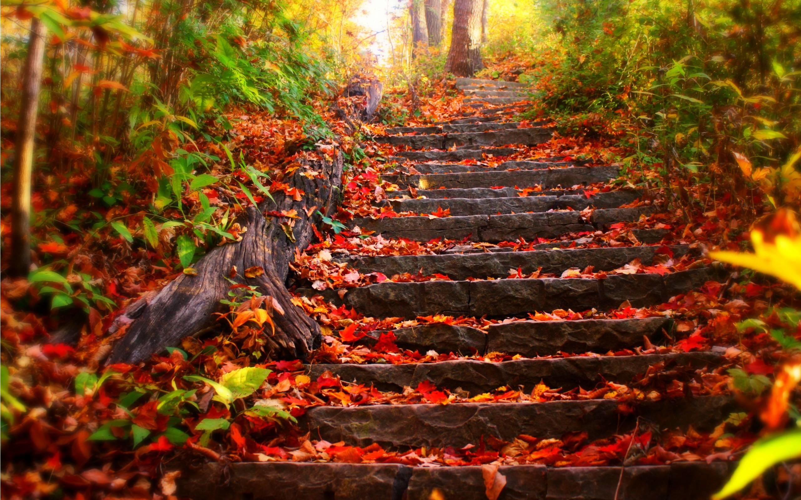 Fall Scenes Wallpaper And Screensavers 58 Images