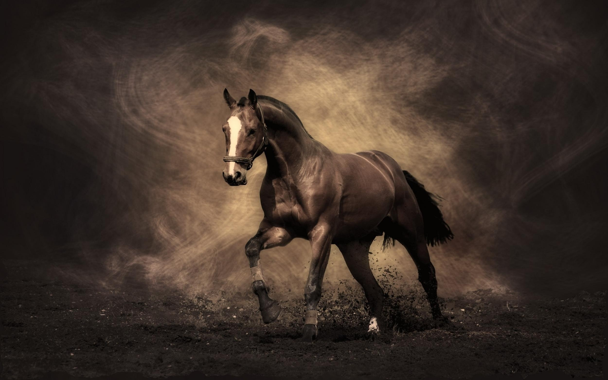Horse photography wallpapers 41 images 2500x1562 horse wallpapers hd pictures one hd wallpaper pictures horse wallpaper hd wallpapers voltagebd Image collections