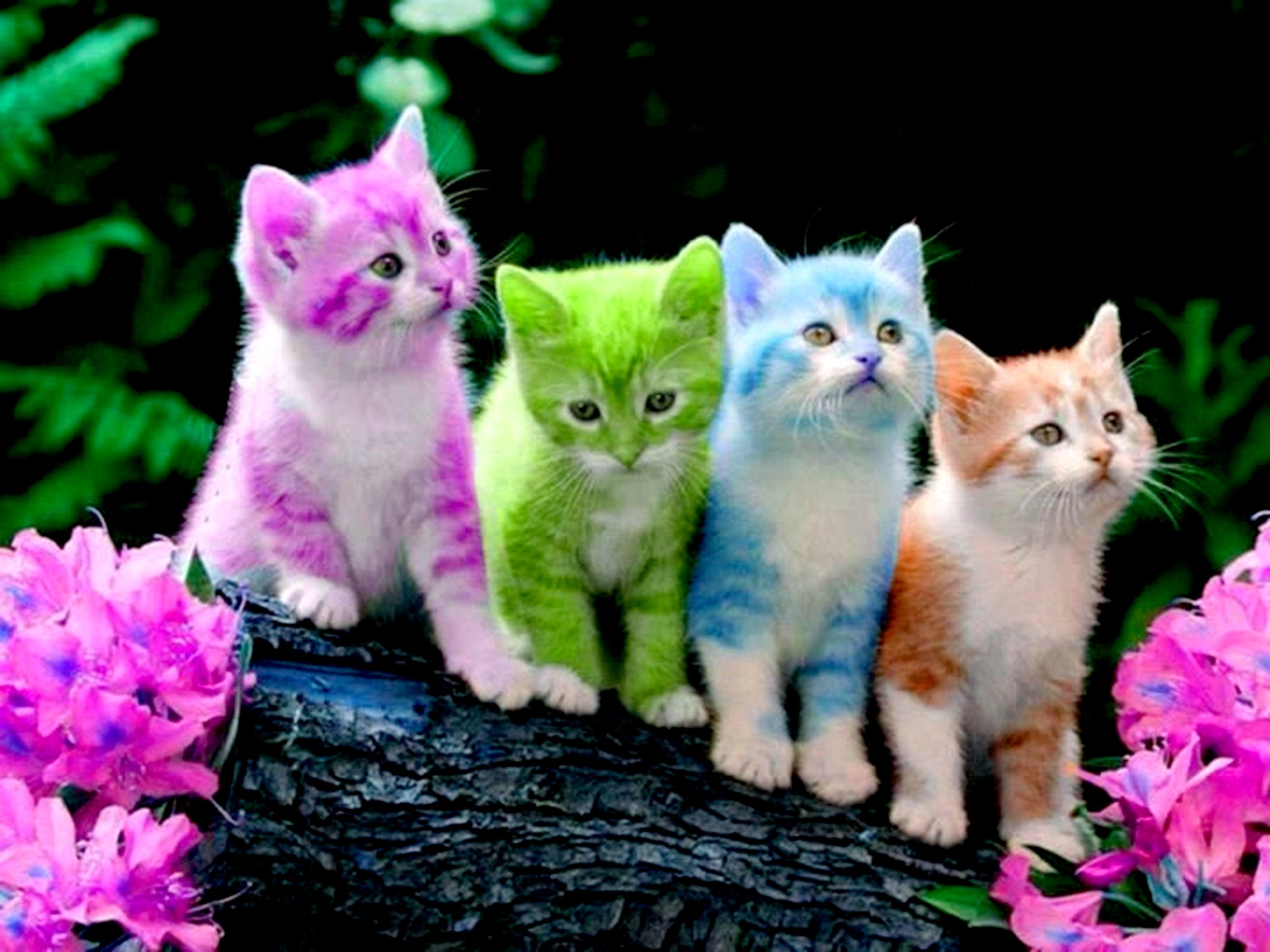 Cute kitten pictures wallpaper 60 images 2880x2160 2880x2160 free cute kitten wallpapers wallpaper altavistaventures Images