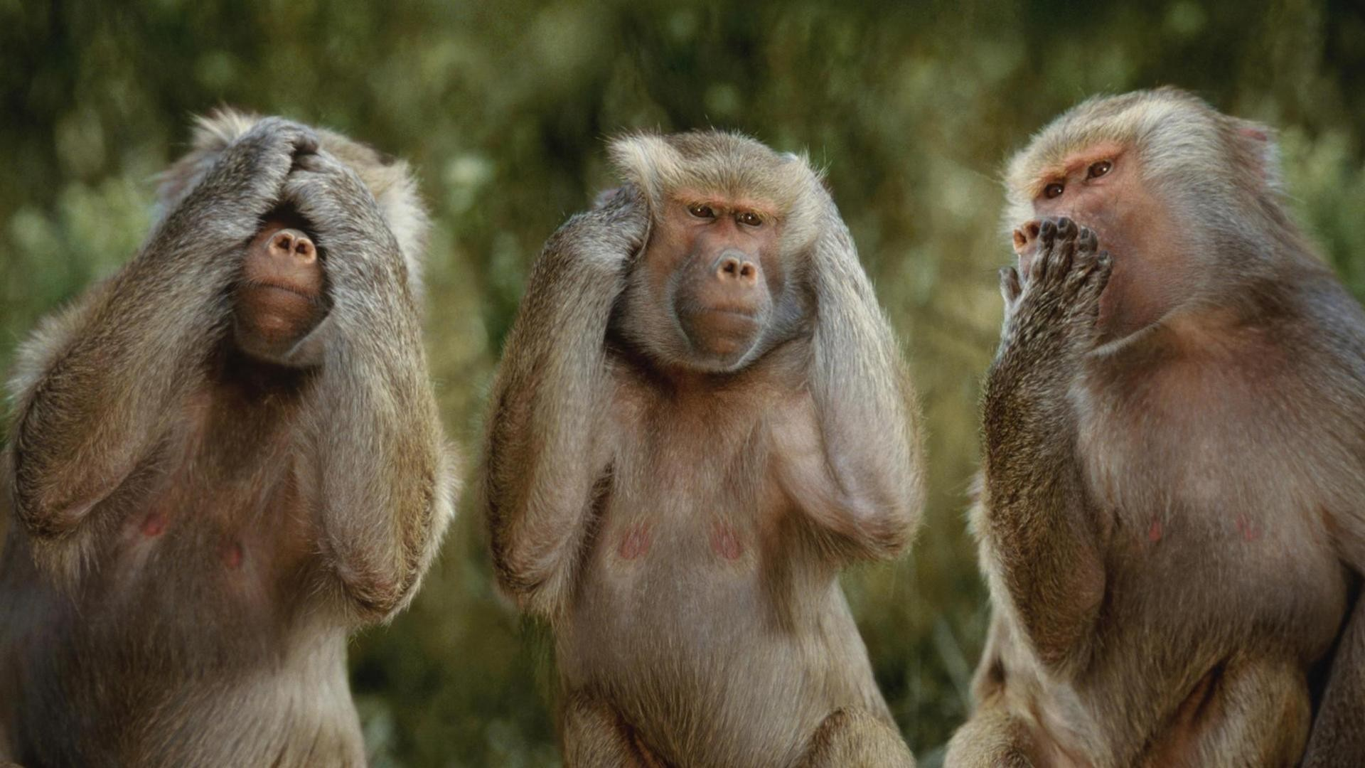 1920x1080 Three Little Monkeys Funny HD Wallpaper