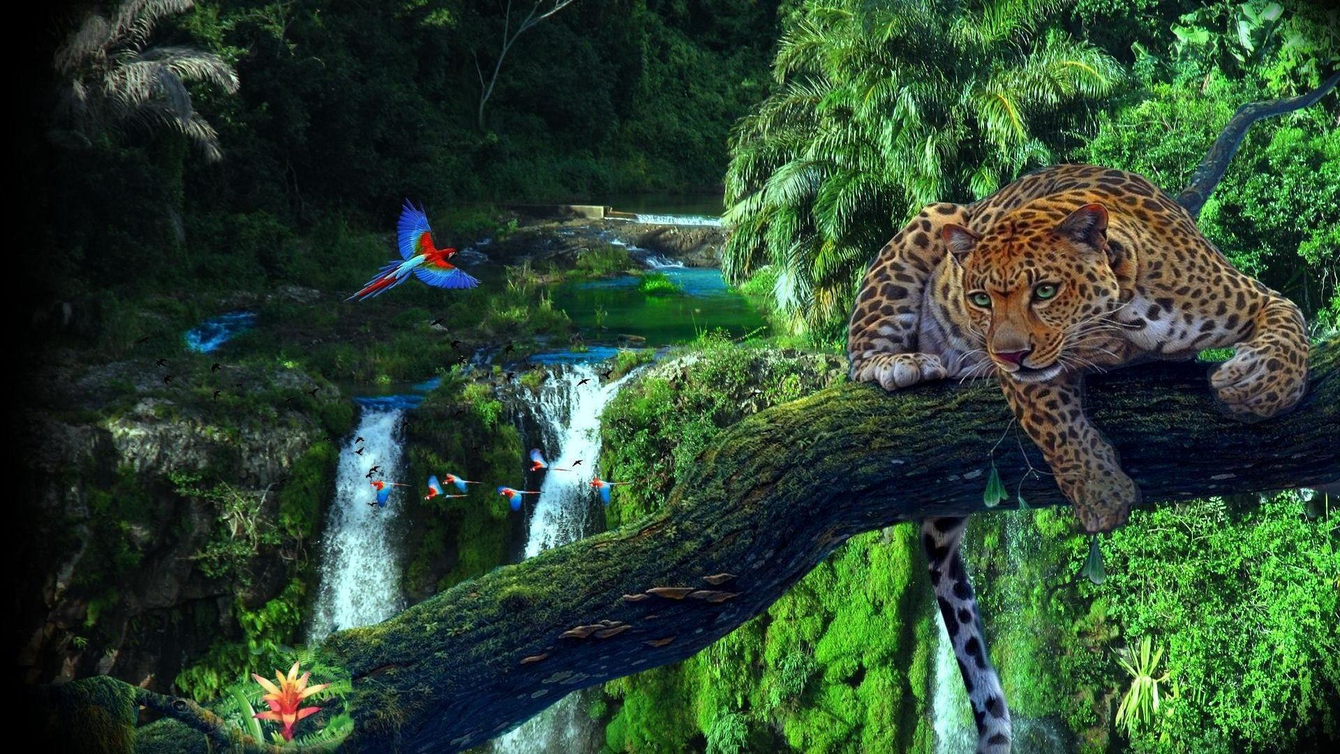 Rainforest wallpaper hd