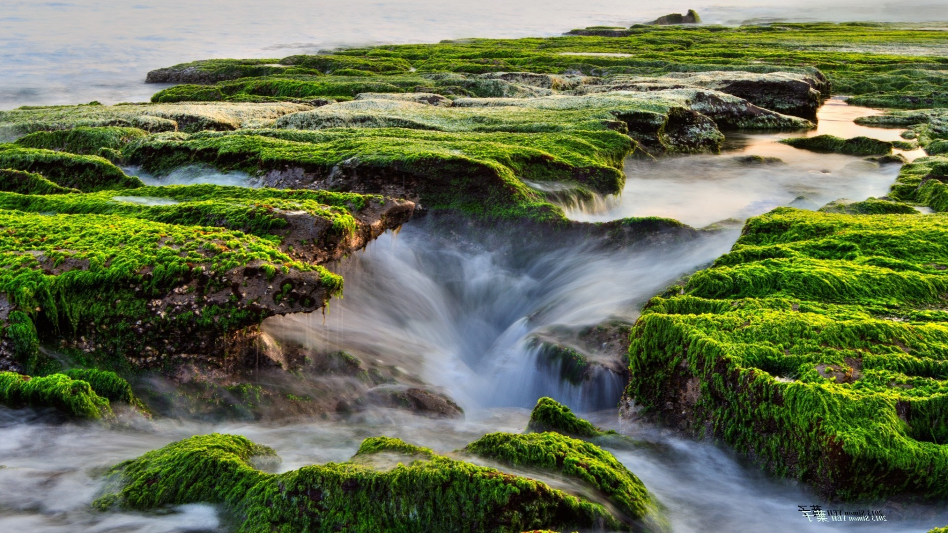 1920x1080 Natural Grass Sea Moss Streams Full HD Widescreen Wallpapers