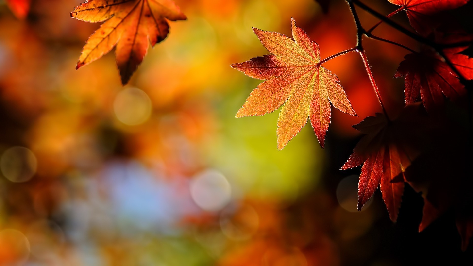 Great Wallpaper Mac Autumn - 579101  2018_85407.jpg