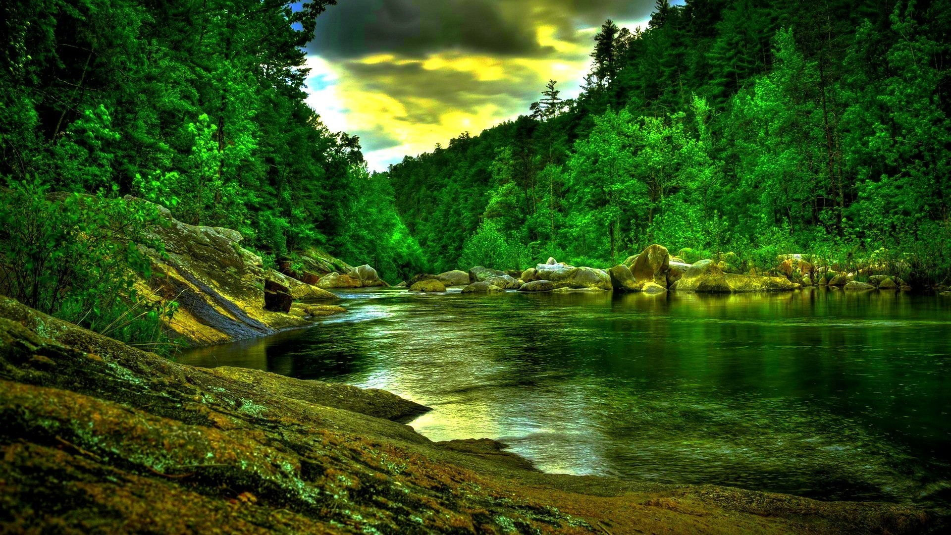 Beautiful Forest Wallpapers (39+ Images