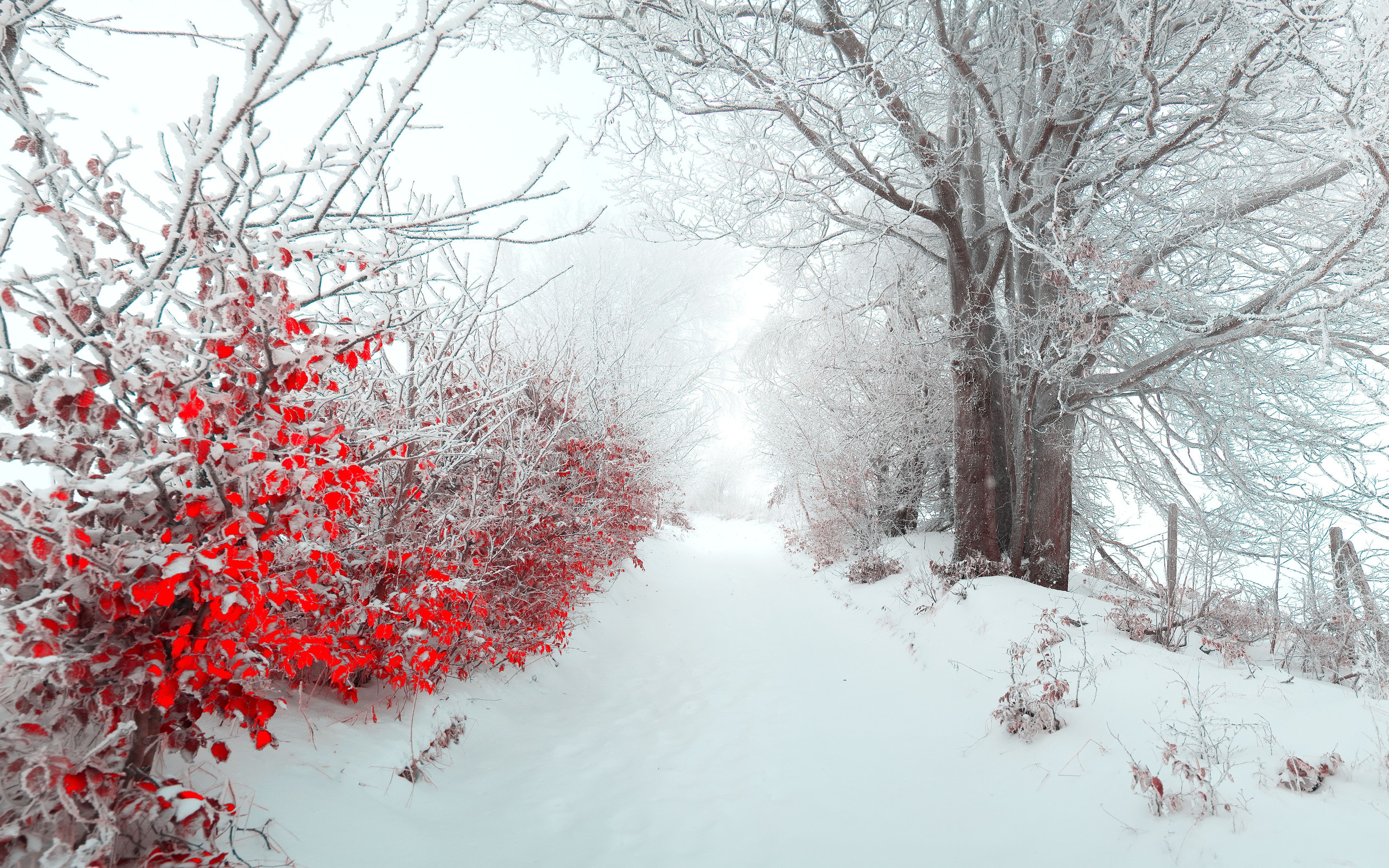 2560x1600 Landscape tree nature beautiful snow winter christmas f wallpaper |   | 182249 | WallpaperUP