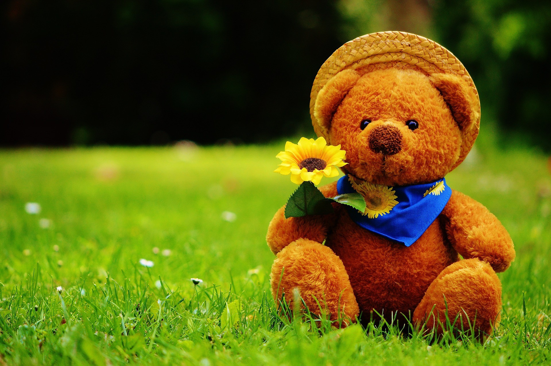 Hd sweet teddy bear wallpapers