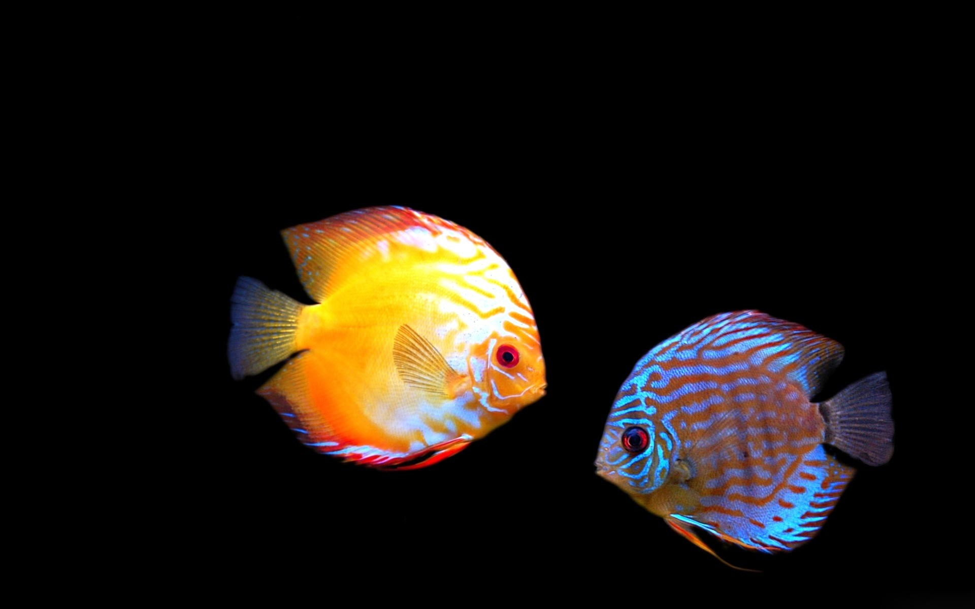 aquarium desktop for windows 7