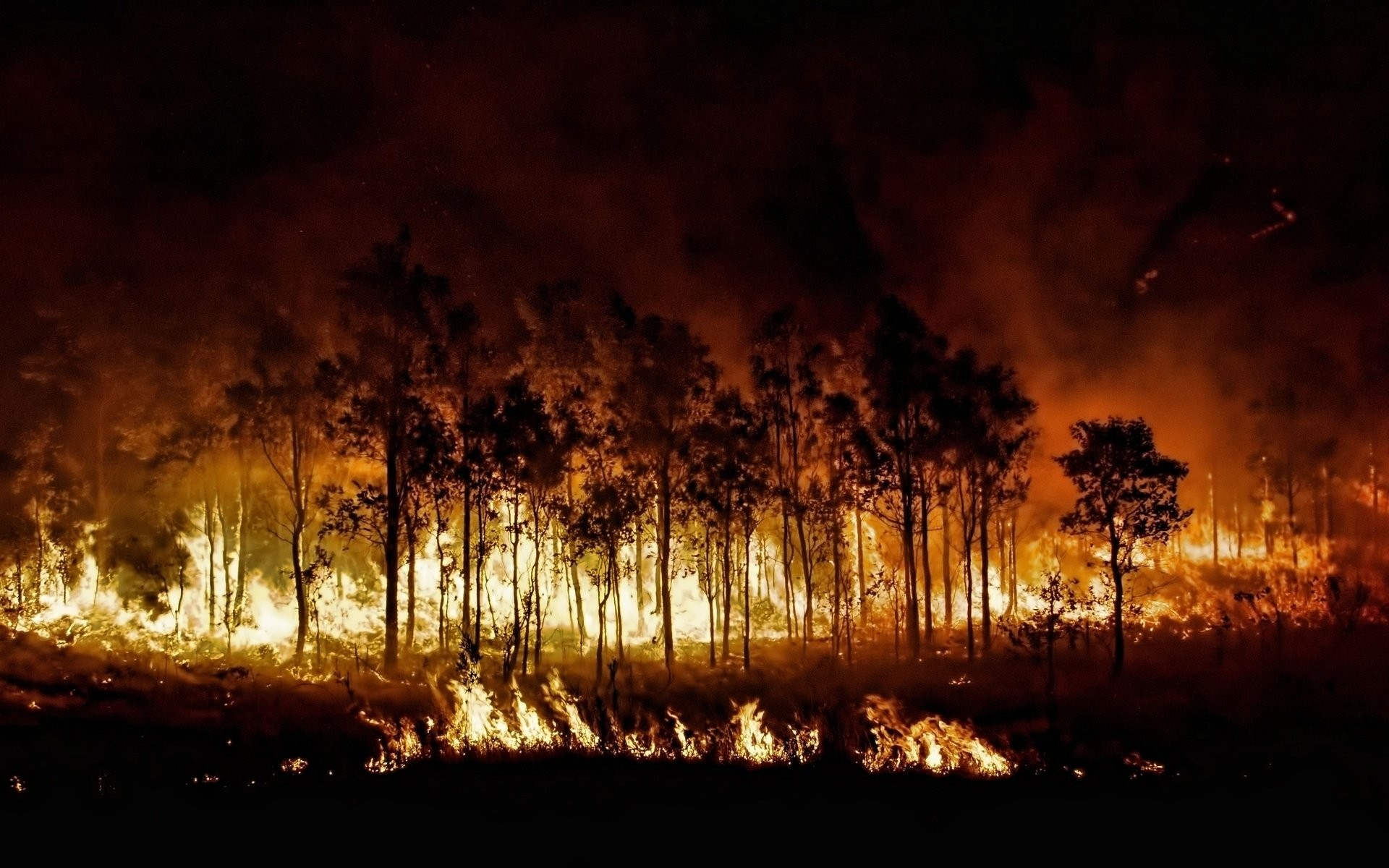 Forest Fire Wallpaper 54 Images