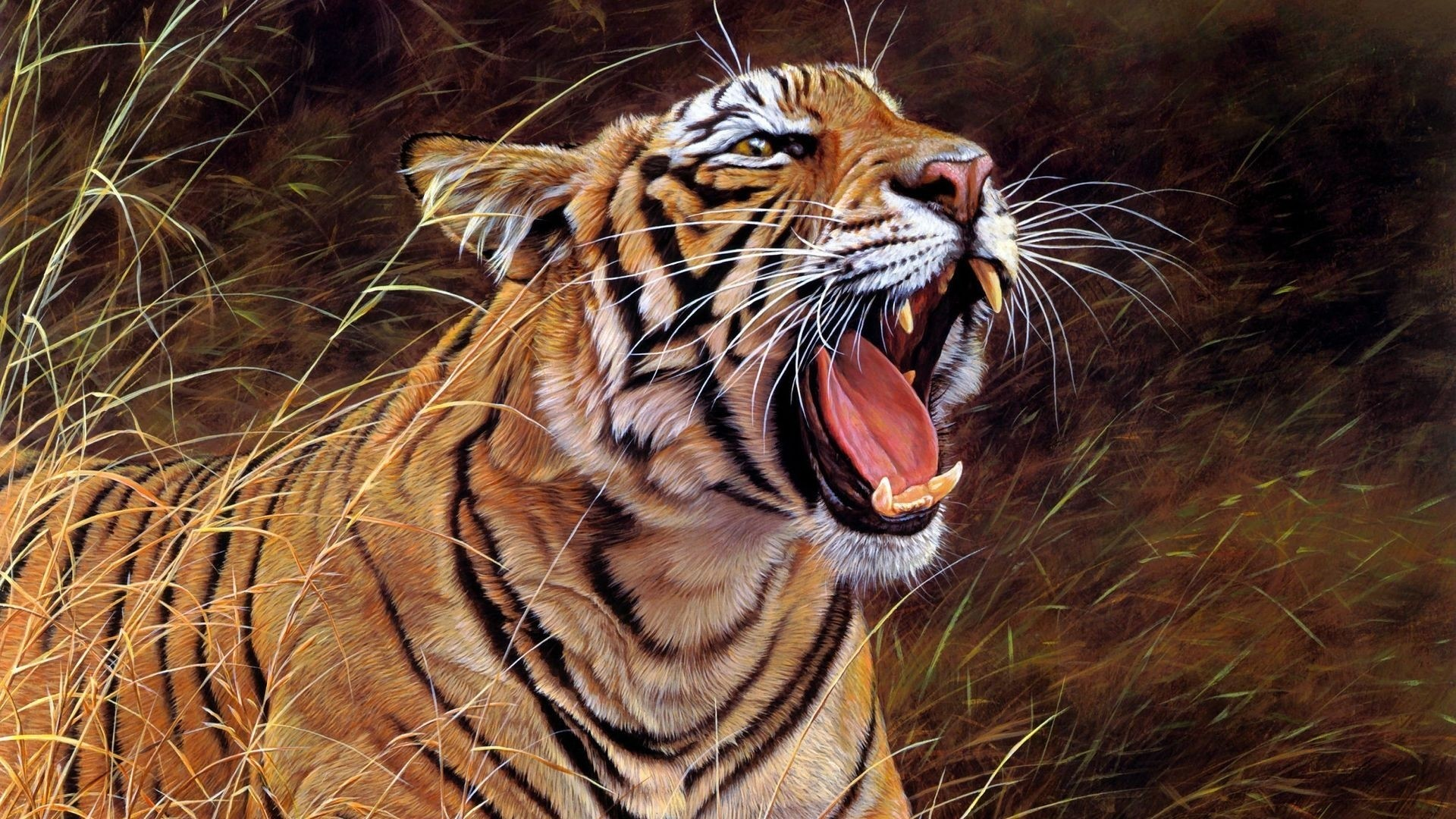 Hd Tiger Pictures Tiger Wallpapers: 1920x1080 Tiger Wallpaper Full HD (65+ Images