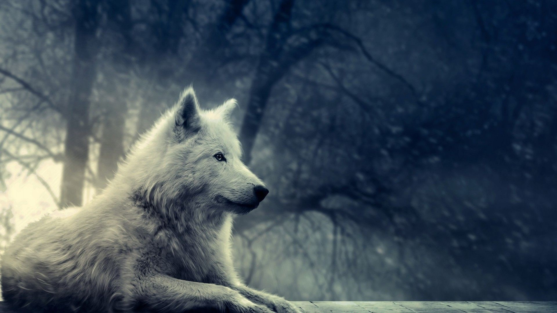 wolf moon howling