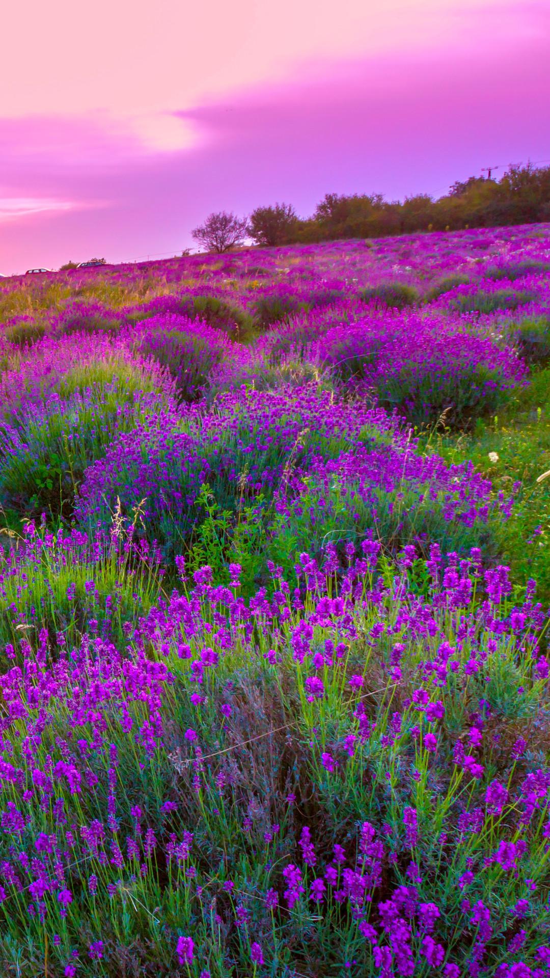 Lavender Wallpaper (64+ images)