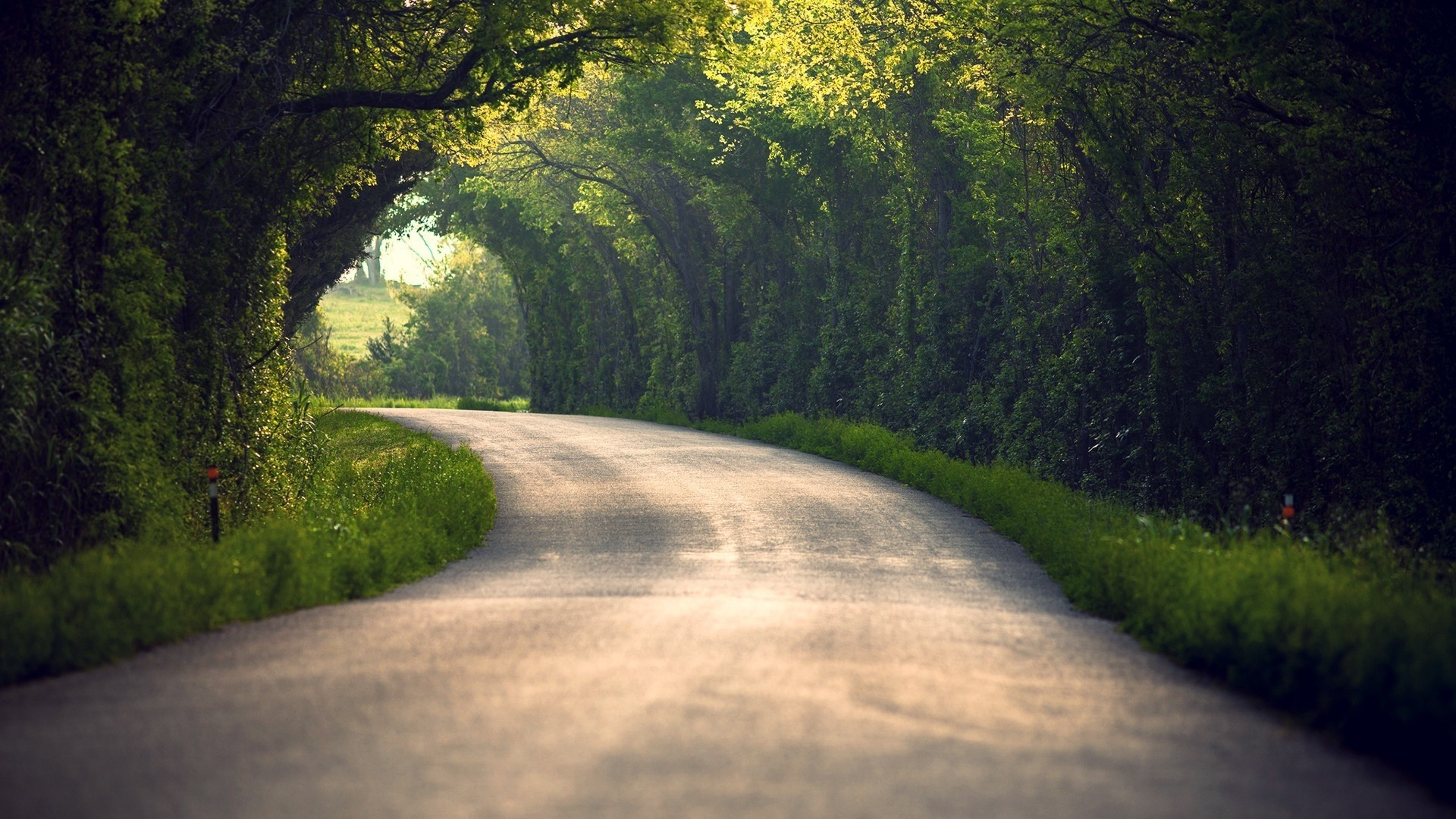 1920x1080 Preview wallpaper summer, nature, road, leaves, trees