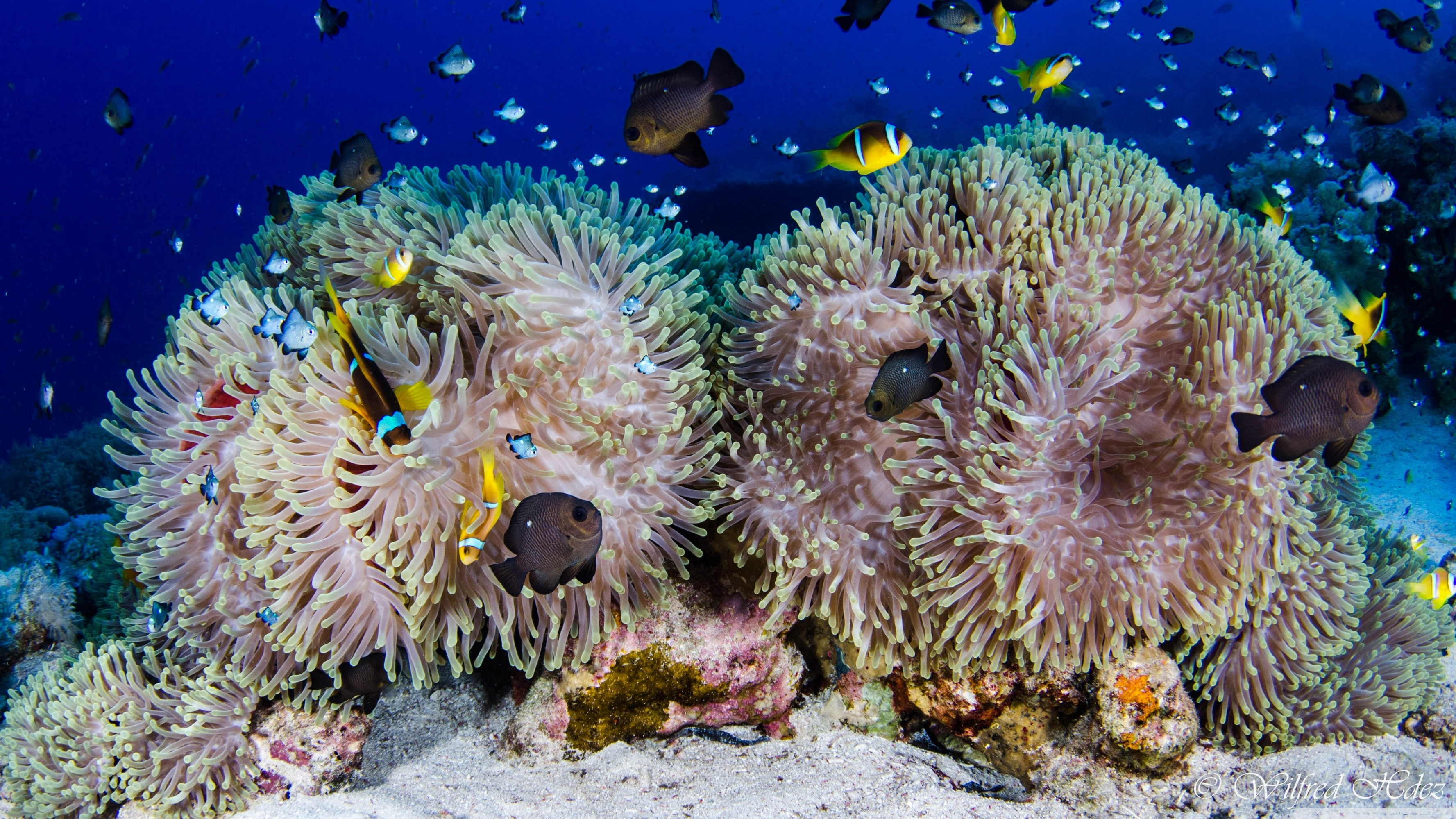 3554x1999 ... Scuba Diving Coral Reef HD HD Wallpaper  Download ...