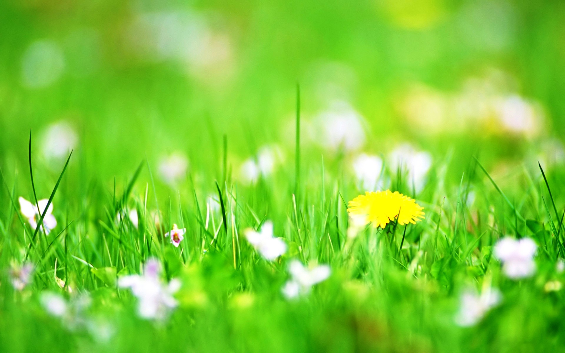 1920x1200 Spring Flowers Backgrounds Desktop Wallpaper 1366×768 Desktop Flower  Backgrounds (53 Wallpapers) |