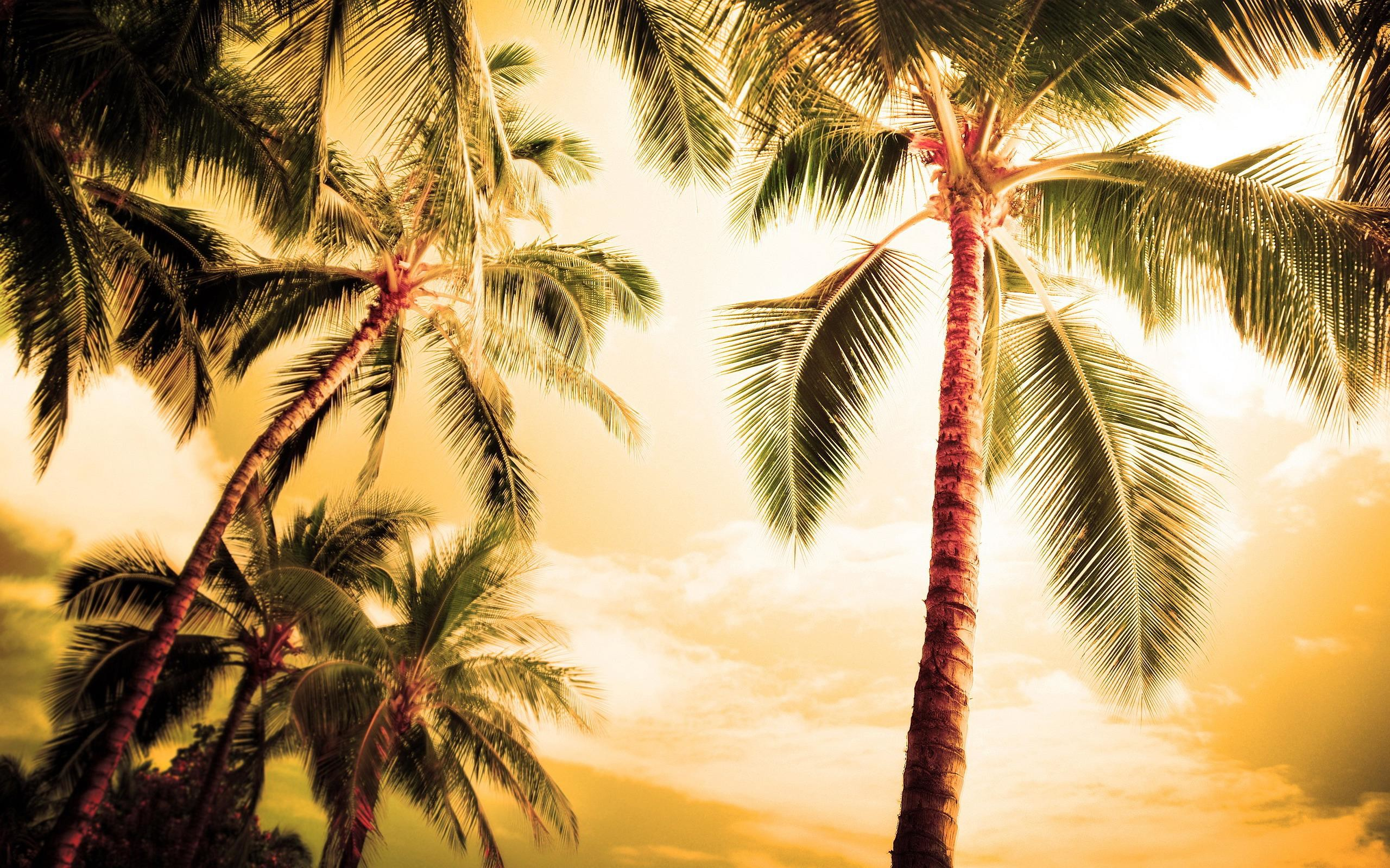 California Palm Trees Wallpaper (48+ images)