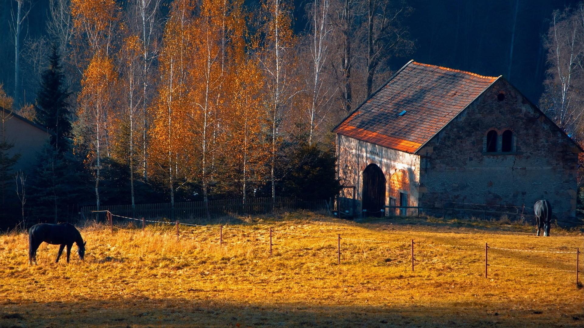 1920x1080 Horses Rustic Farm Barn Landscapes Buildings Autumn Fall Trees