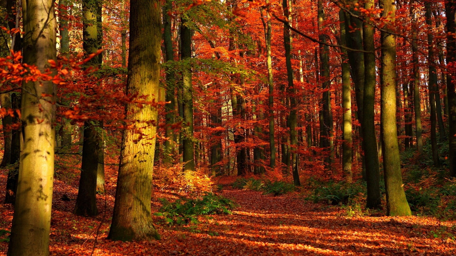 1920x1080 Preview wallpaper autumn, wood, leaves, trees, red, gleams