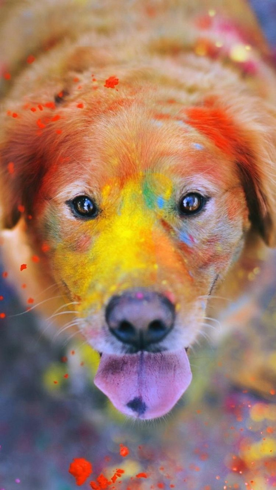 1080x1920 Colorful Paint Giant Dog Animal iPhone 6 wallpaper