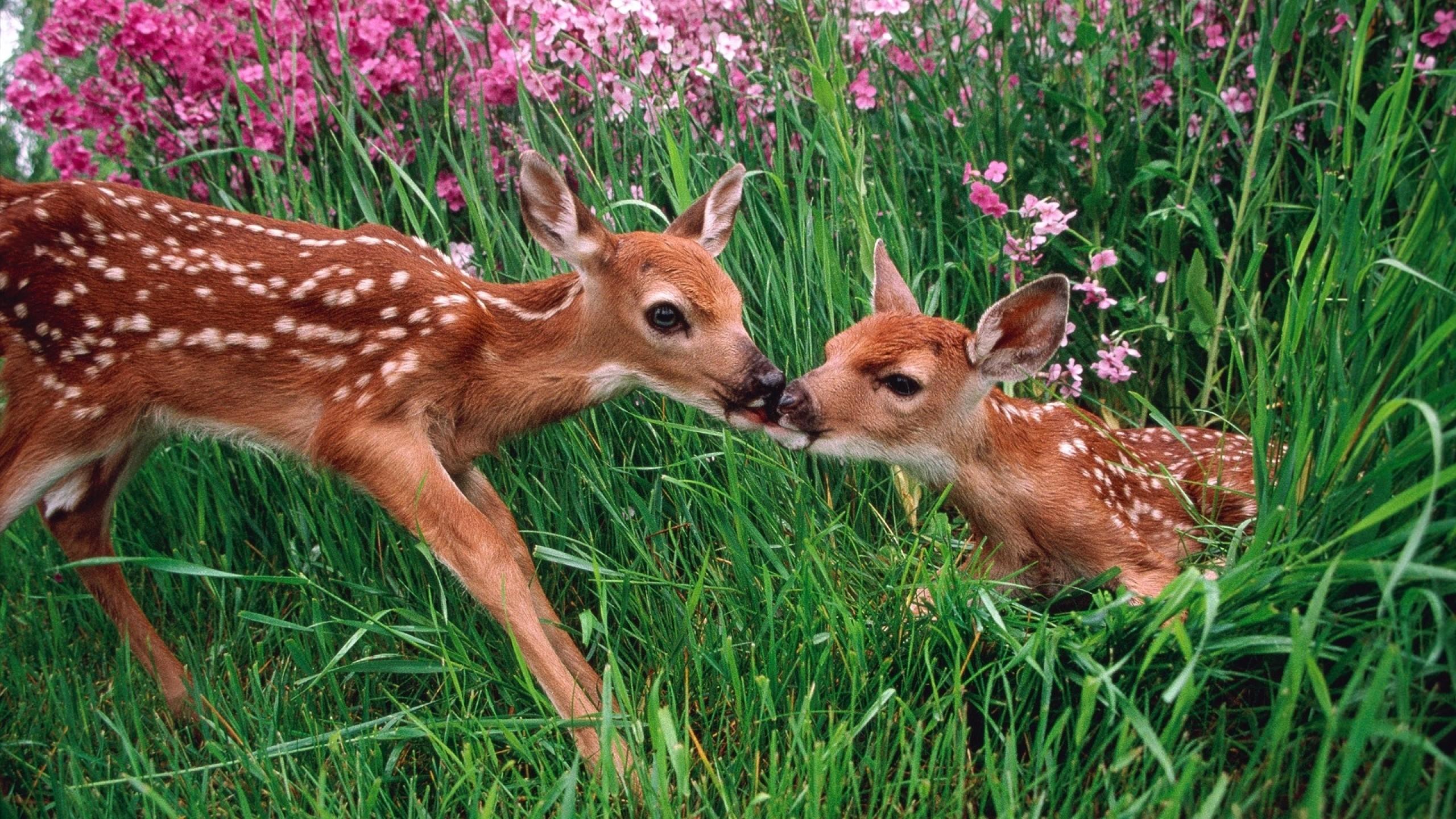 Spring animals desktop backgrounds