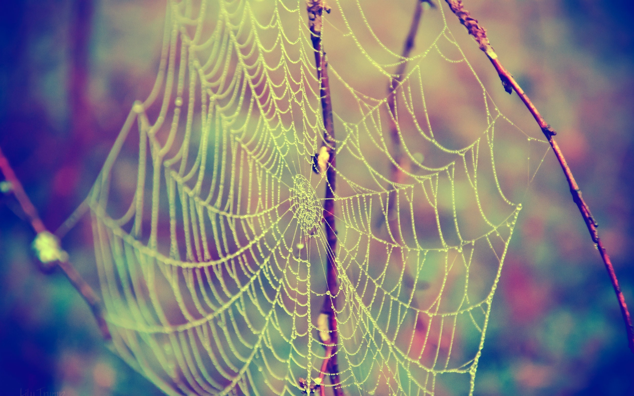 2560x1600 Nature insects web spider webs wallpaper