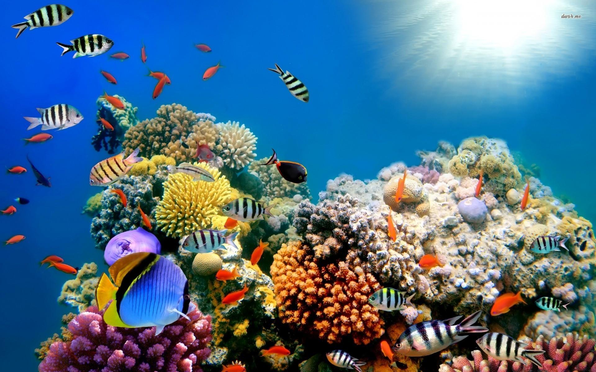 Coral reef screensavers & wallpaper