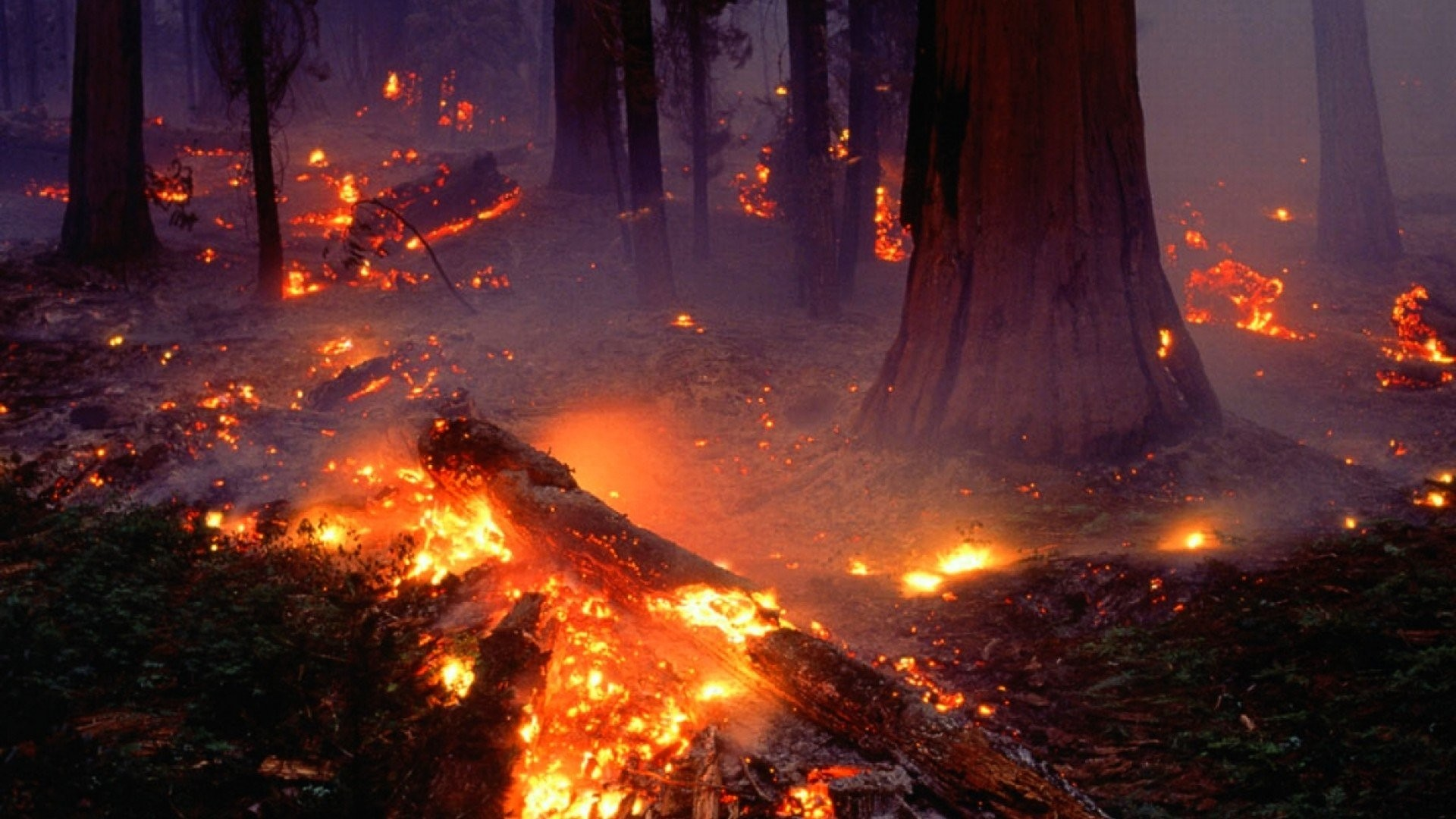1920x1080 Forest Fire Flames Tree Disaster Apocalyptic 23 Wallpaper