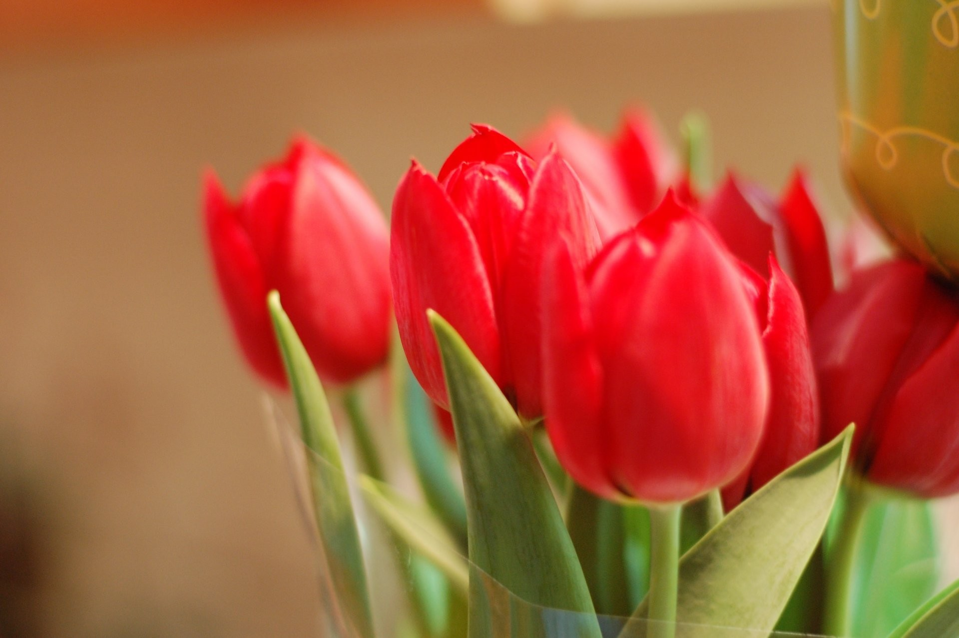 1920x1277 flower flowers tulips red petals bud buds close up leaves leaves background  wallpaper widescreen full screen