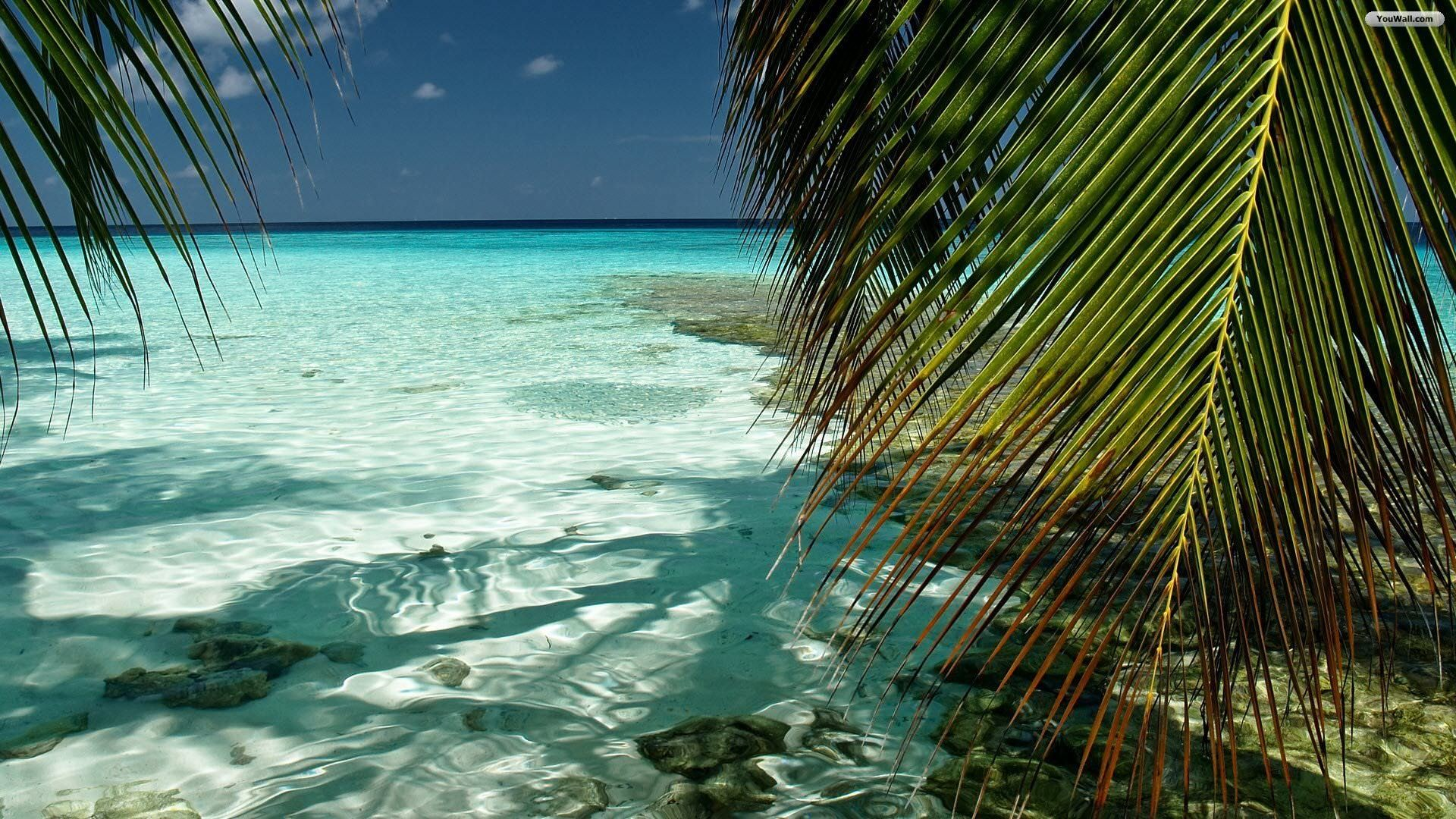 Beach Free Ipad Wallpapers: Tropical Beach Background (64+ Images