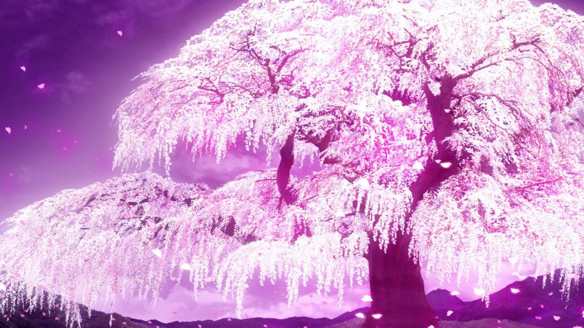 1920x1080 1000+ images about 1アニメ壁紙 on Pinterest | Anime scenery ... Cherry Blossom  WallpaperCherry ...