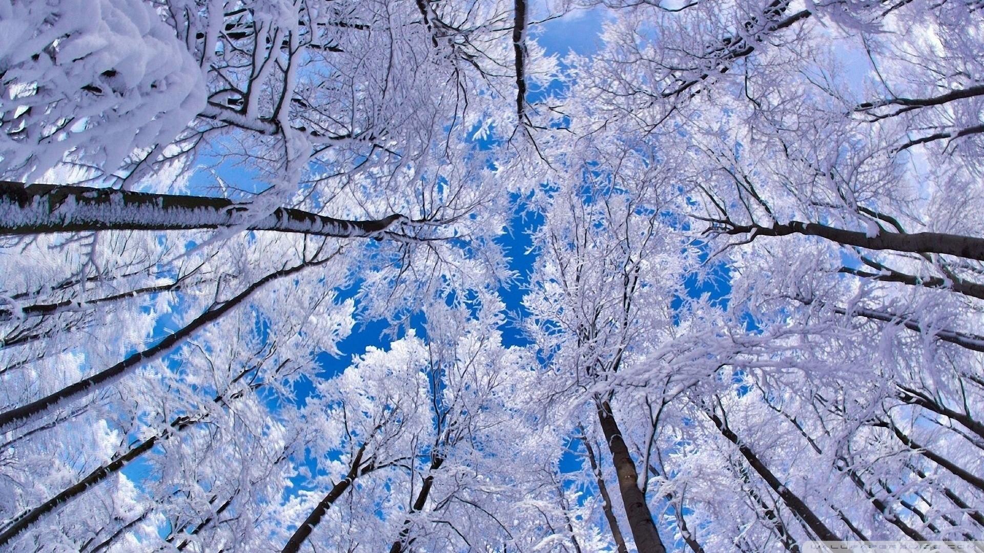 Snowfall Wallpaper Hd 1080p