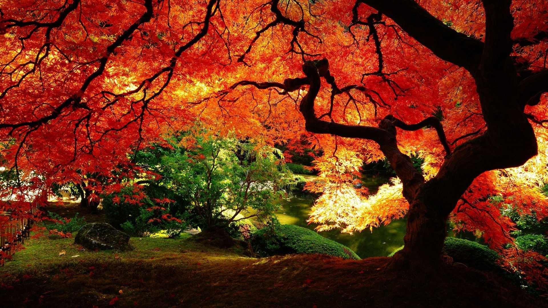 1920x1080 Beautiful autumn tree HD Wallpaper  Beautiful ...