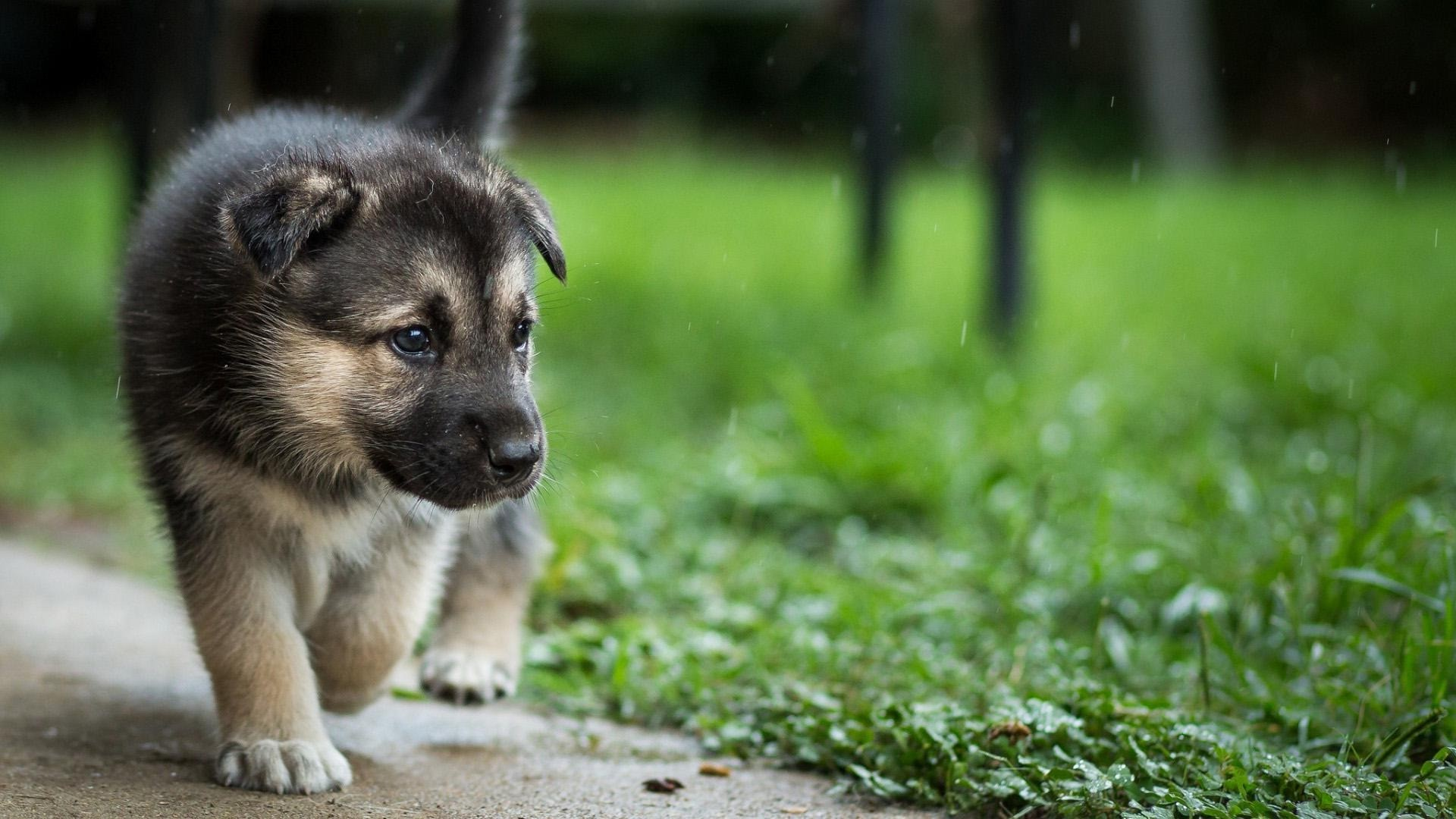 Dogs And Puppies Wallpaper Dog Wallpaper (...
