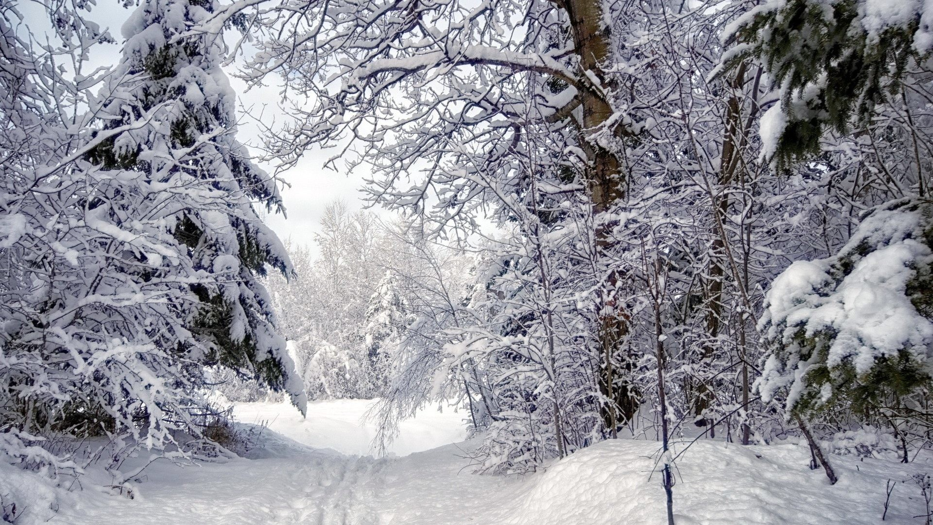 1920x1080 Winter Forest Snow Trees Path Desktop Animated Wallpaper Free