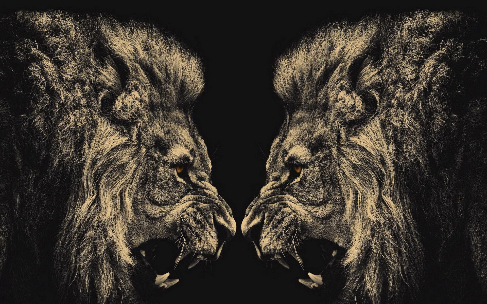 1920x1200 ... Lion Wallpaper (14) ...